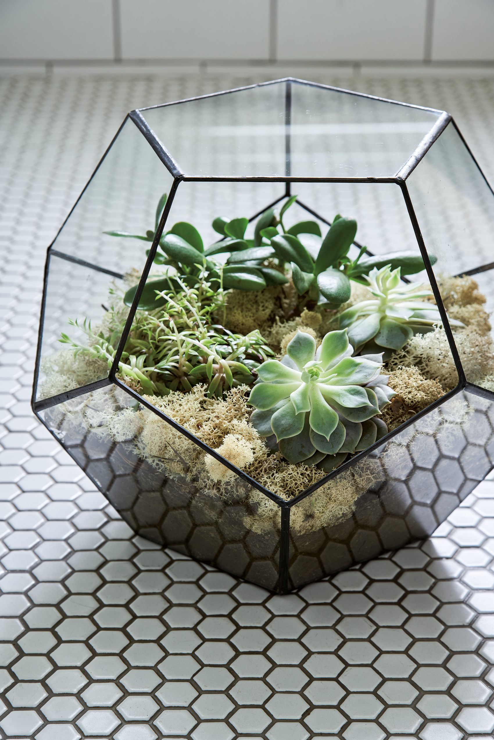Terrarium filled with (from left) radiator plant; money tree; echiveria and finished
