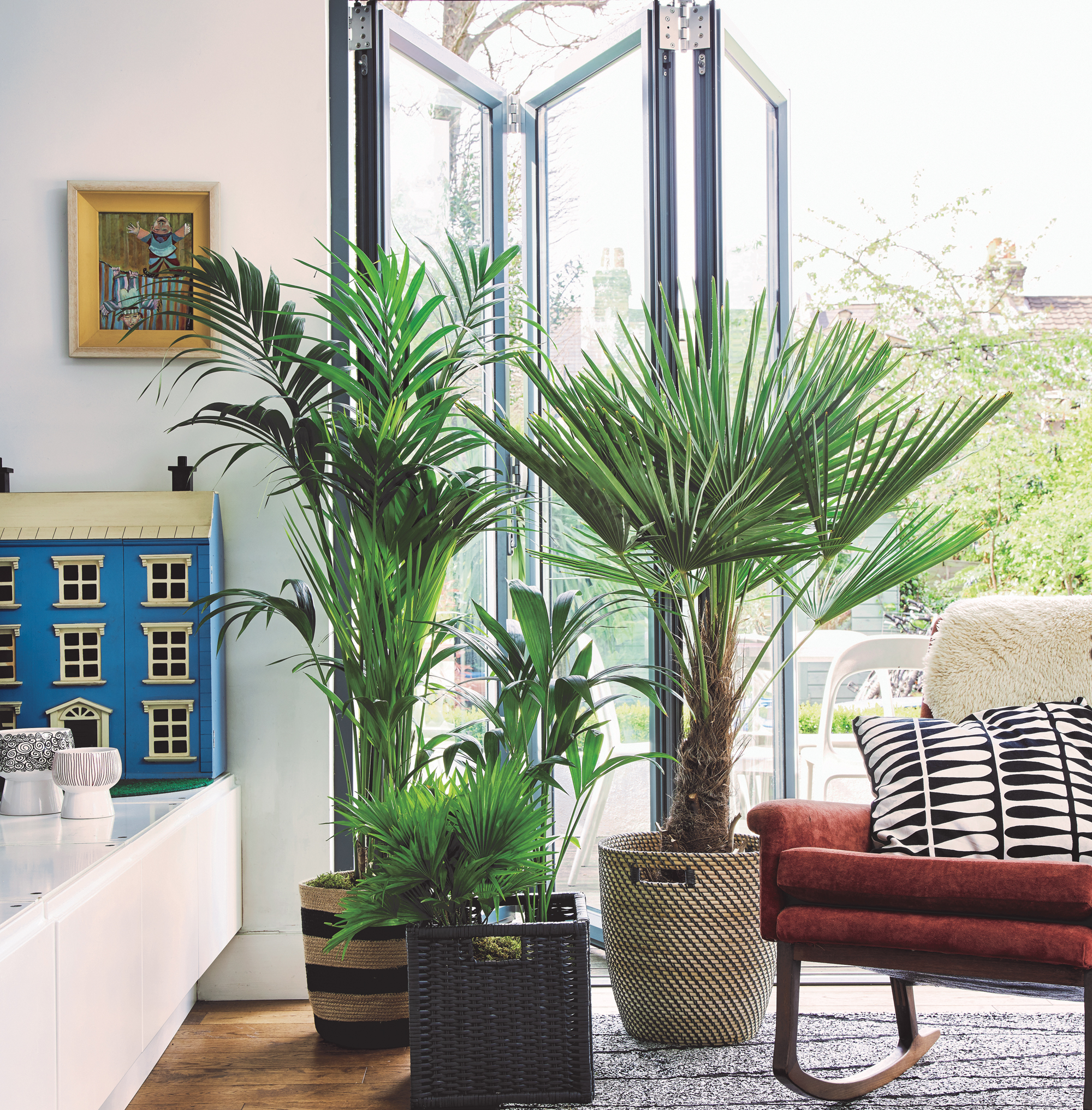 Three containers of palms make an eye-catching display and blur the boundary between the indoors and outdoors. (from left) Kentia palm; Washington palm; Kentia palm and Chinese Windmill palm. Room featured in At Home With Plants (Nick Pope/Mitchell Beazley/PA)