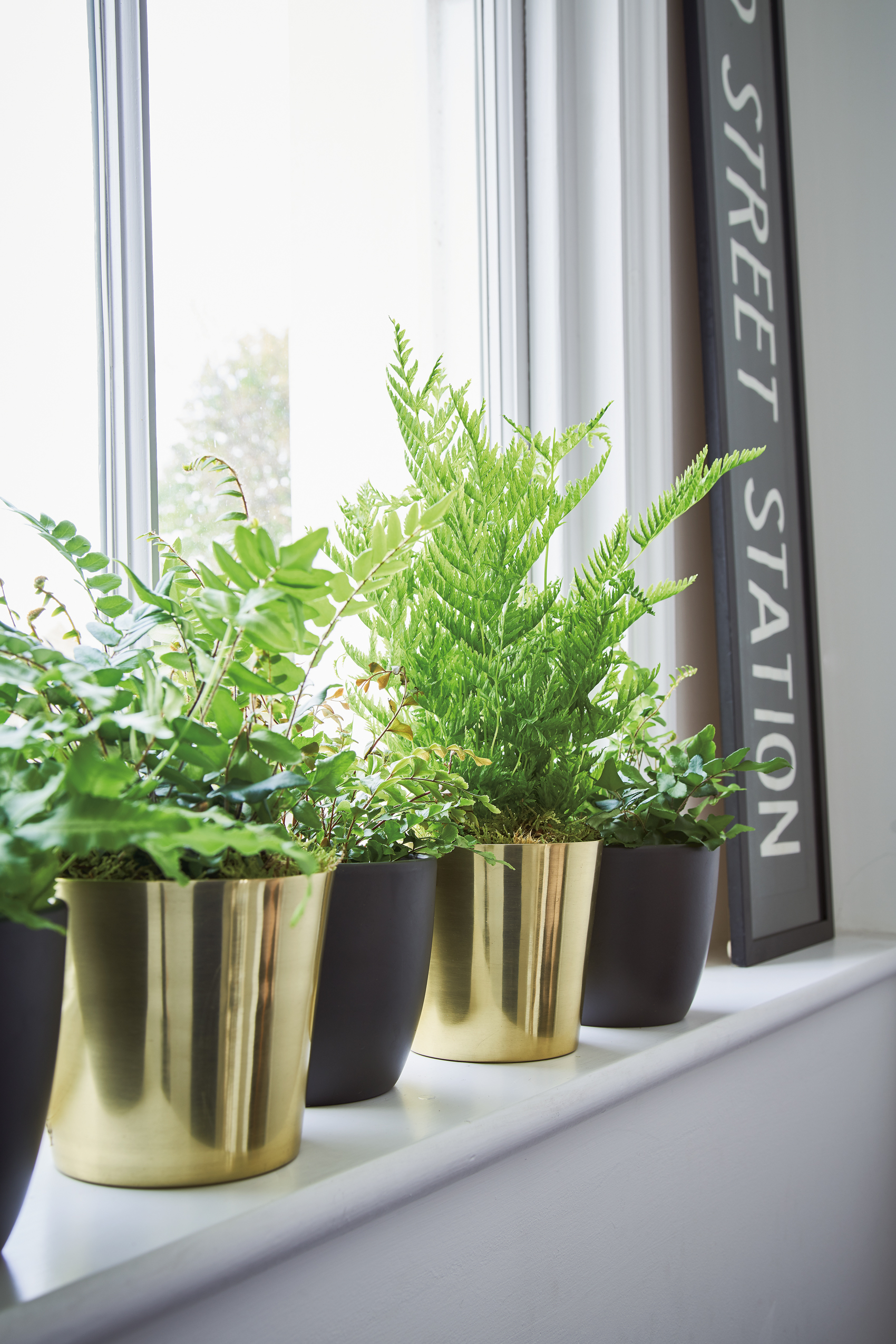 A line up of planters in alternating styles is a simple design device for displaying a collection of plants from the same family, in this case, ferns. Room featured in At Home With Plants y Mitchell (Nick Pope/Mitchell Beazley/PA)