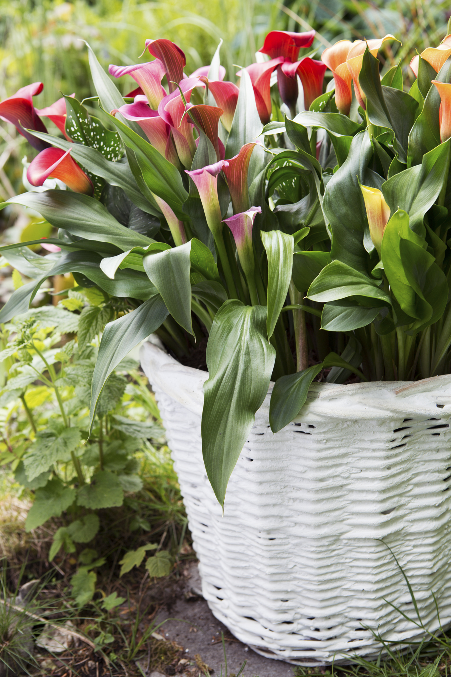 Container Planting In The Summer Everything You Need To Know Bt