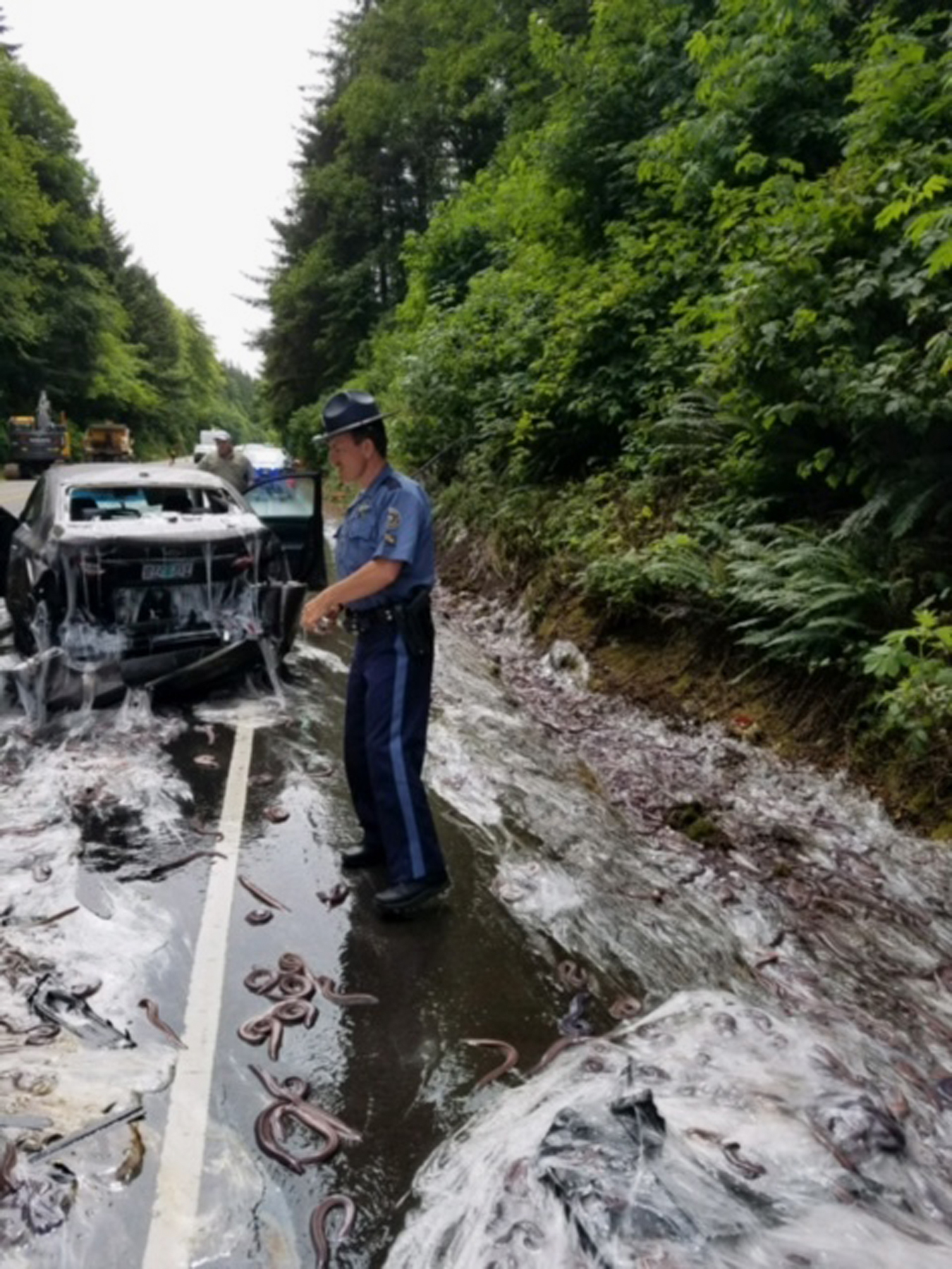 In this photo provided by the Oregon State Police, a state police officer works the site after a truck hauling eels overturned on Highway 101 in Depoe Bay, Ore., Thursday, July 13, 2017. Police said Salvatore Tragale was driving north with 13 containers holding 7,500 pounds (3,402 kilograms) of hagfish, which are commonly known as slime eels. (Oregon State Police/AP)