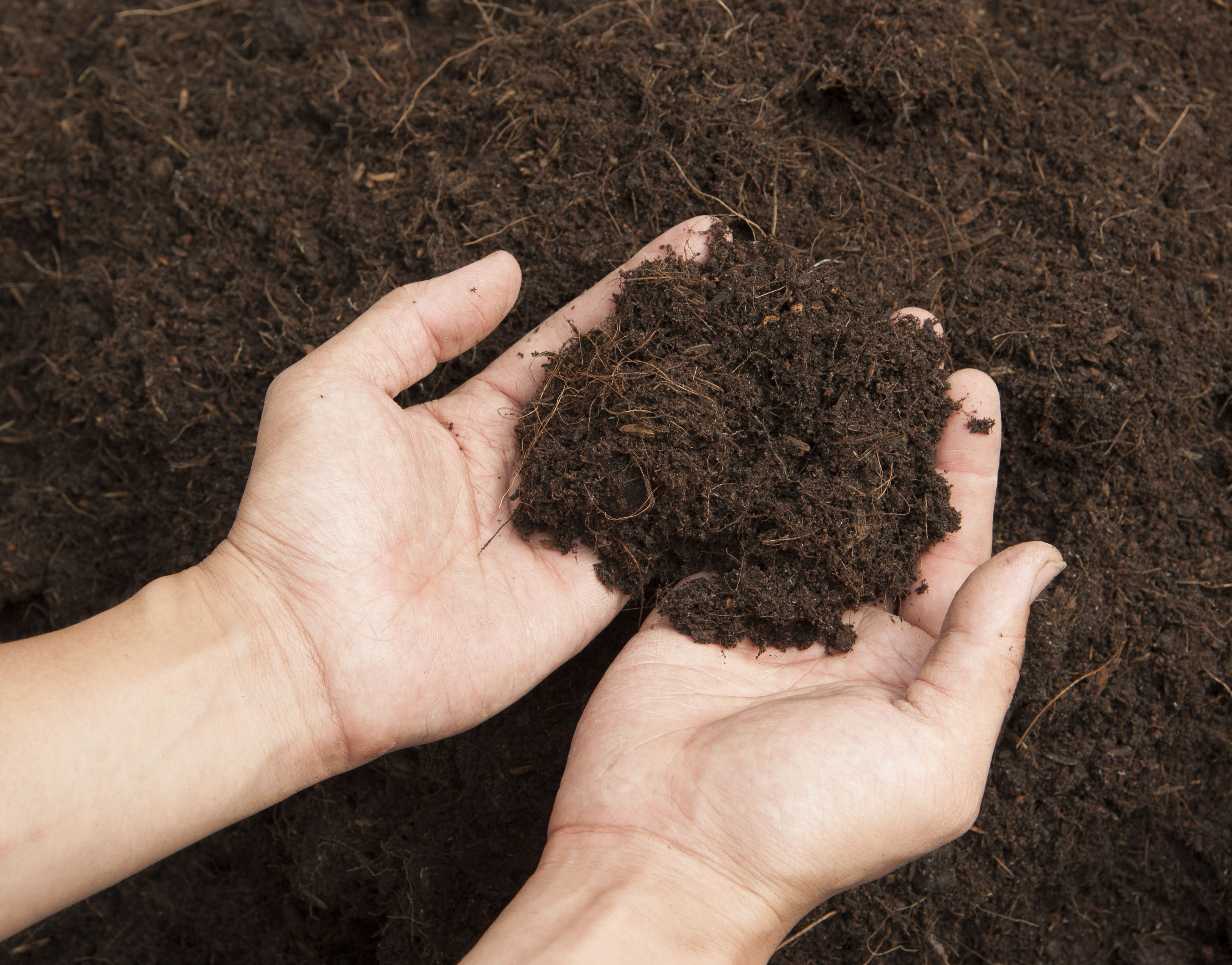 Test your soil. (Thinkstock/PA)