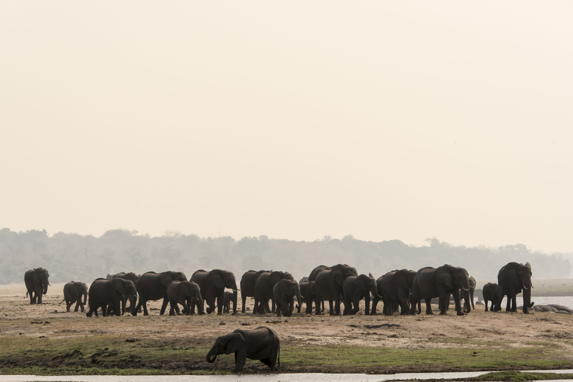 Large elephant herds gather to drink from the river in Chobe National Park (Sarah Marshall/PA)