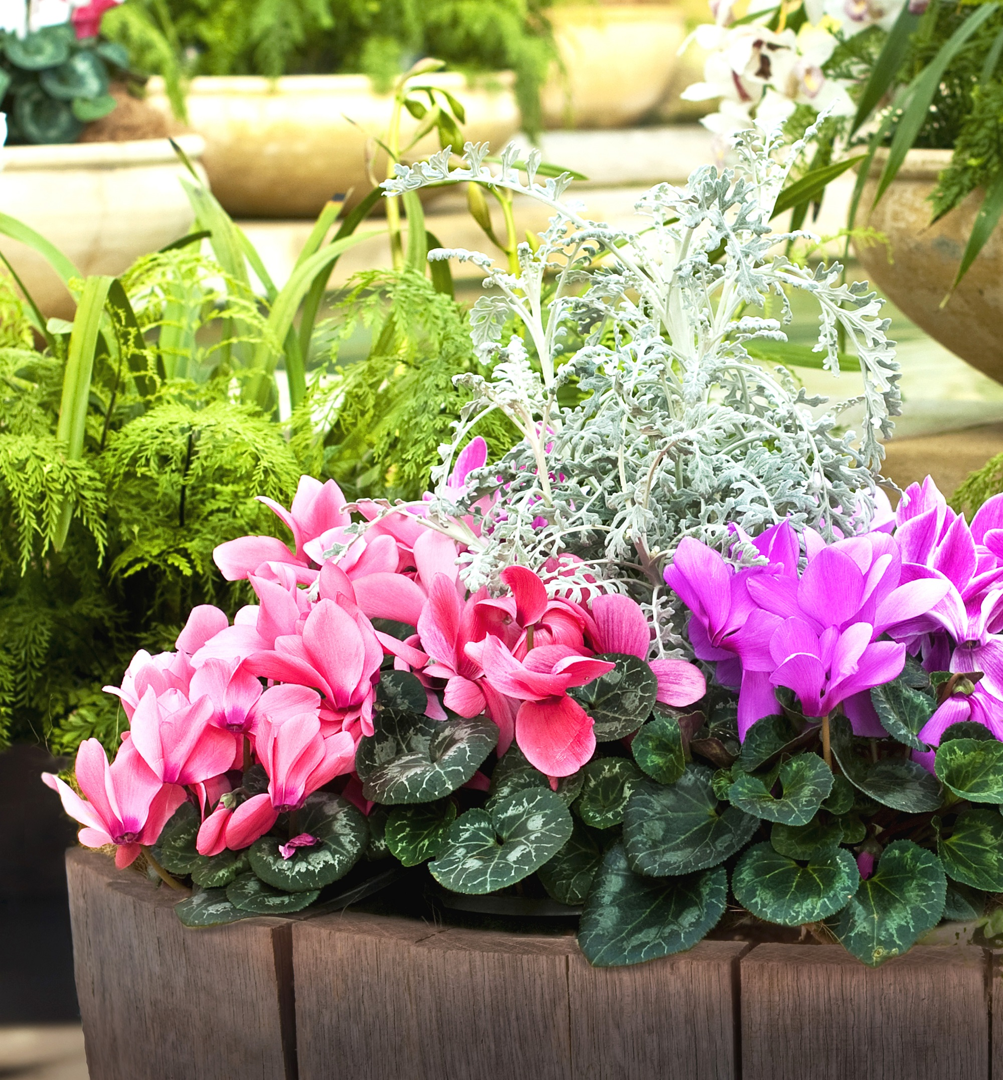 Autumn planters provide a warm welcome (Squire's Garden Centres/PA)