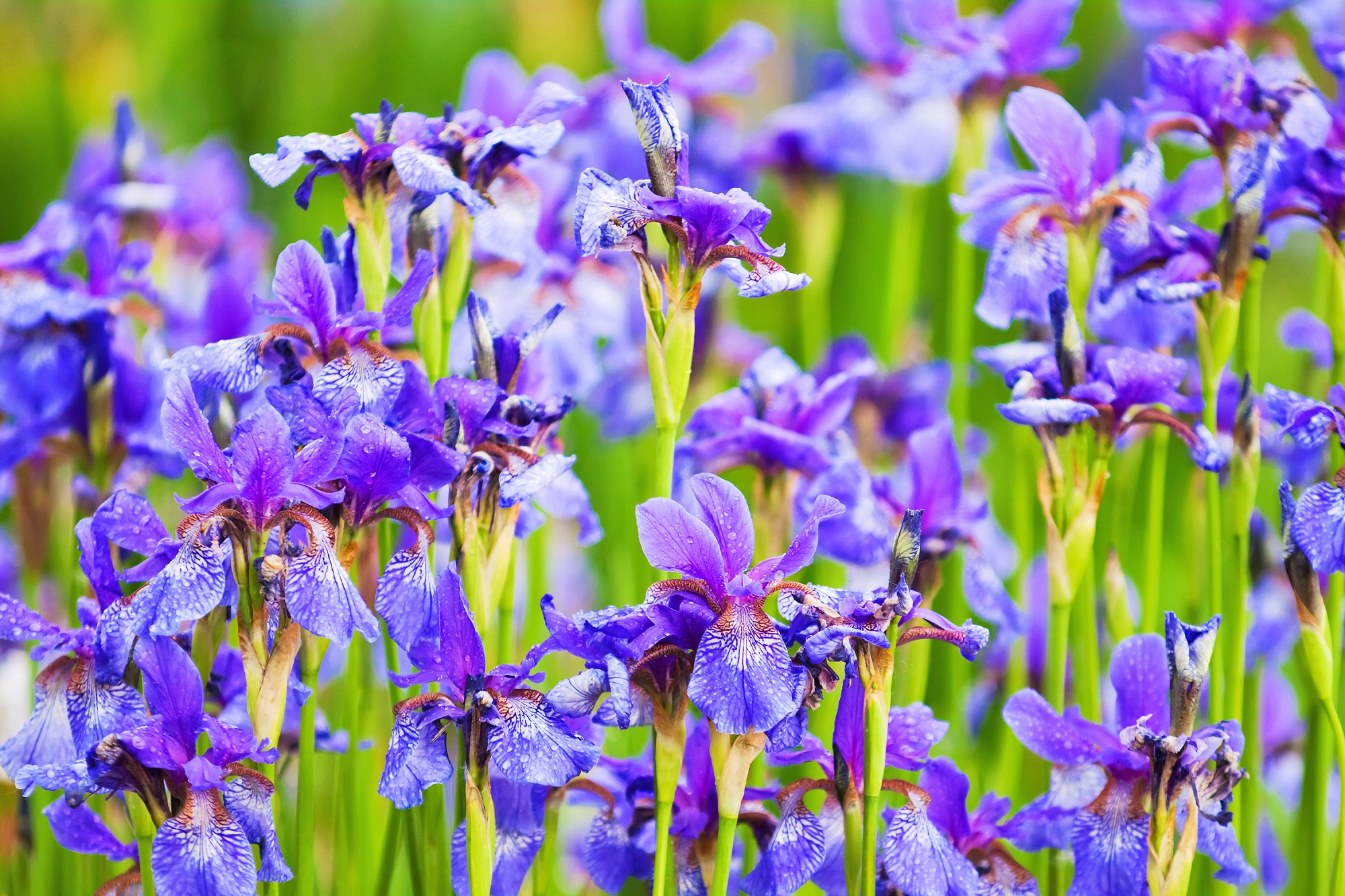 Pop in iris bulbs for spring colour (Squire's Garden Centres/PA)