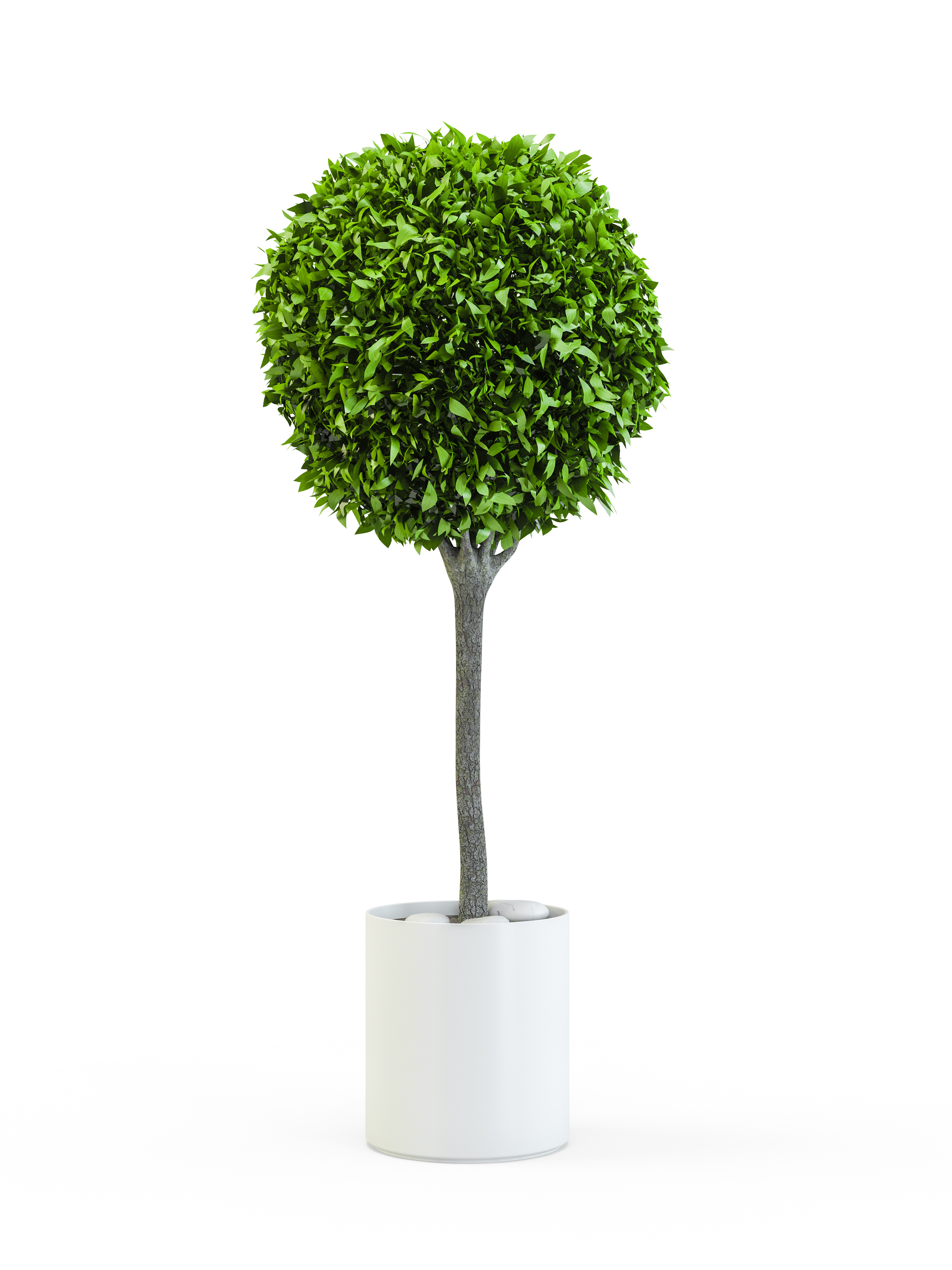 Topiary trees in lollipop shapes (Thinkstock/PA)