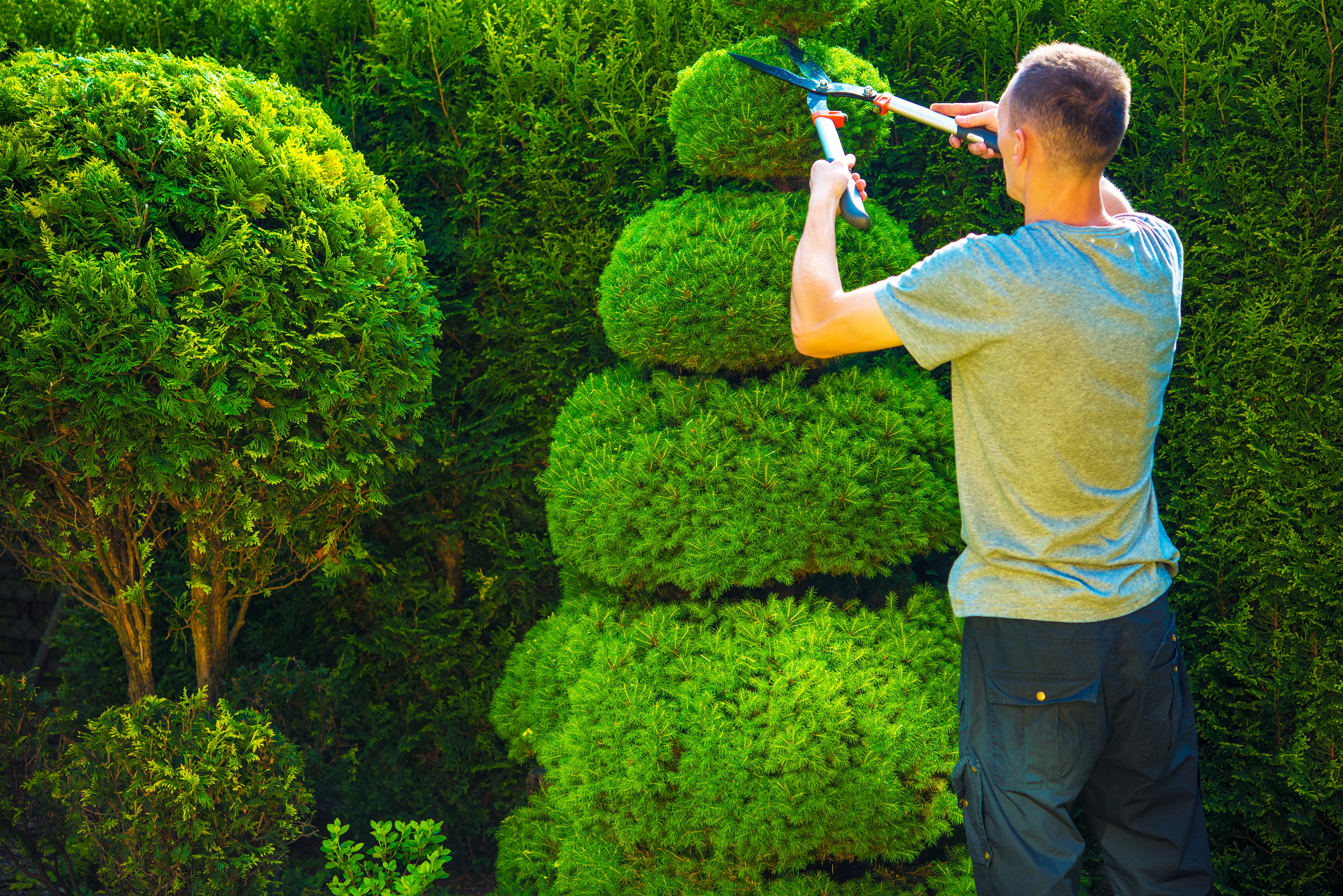 Trim to keep it in shape (Thinkstock/PA)
