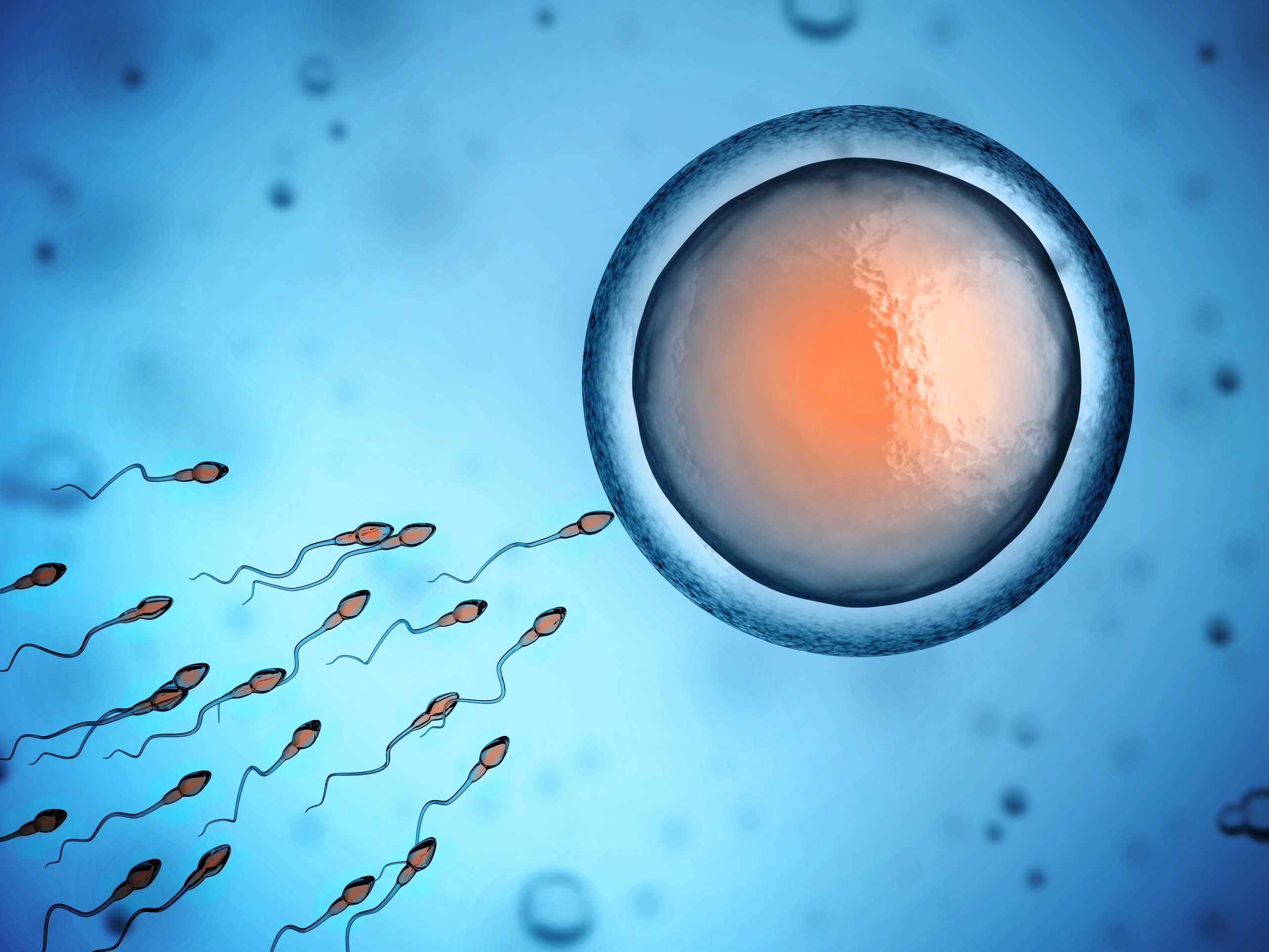 Human sperm and egg cell illustration.
