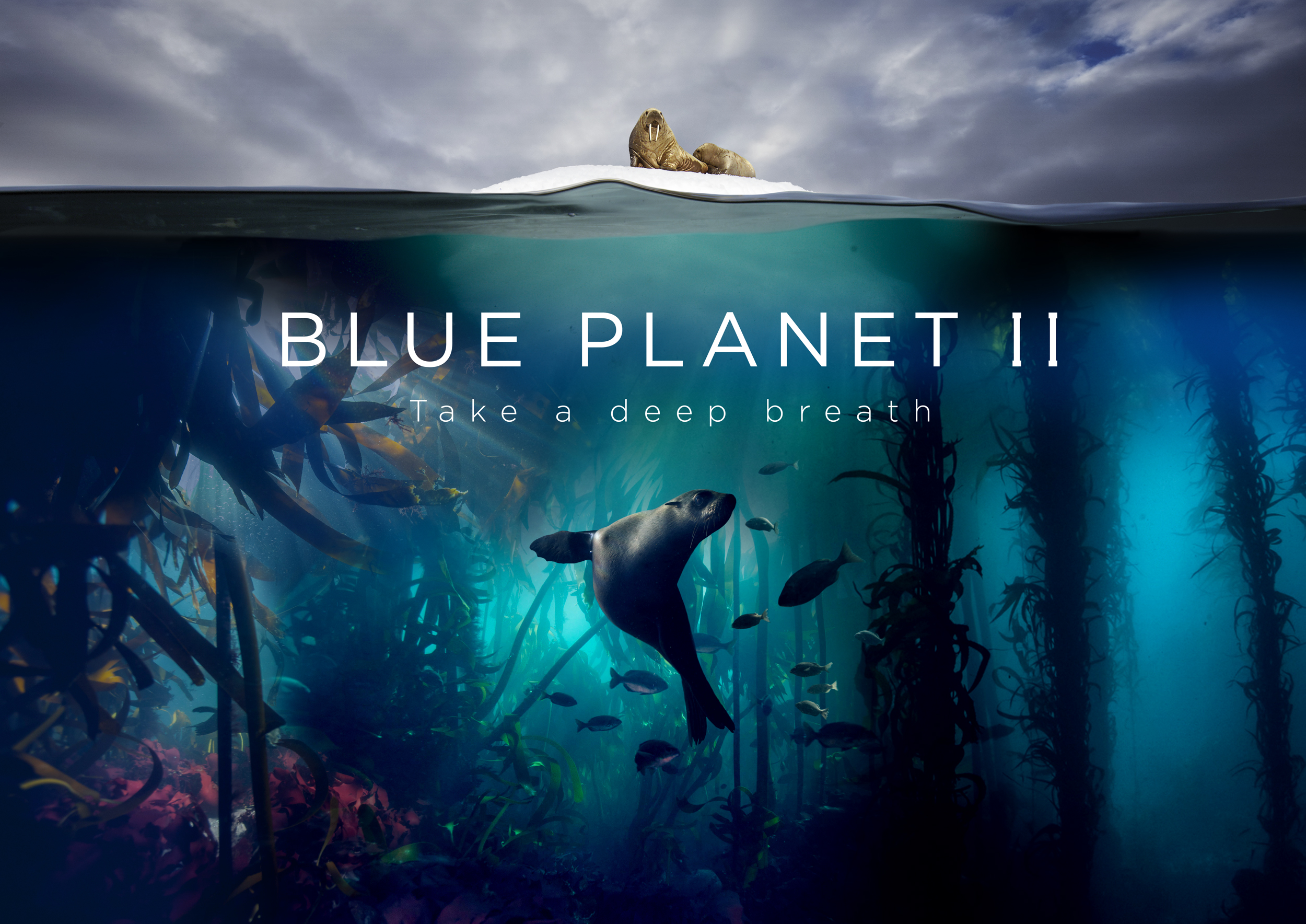 Blue Planet II (BBC Worldwide)