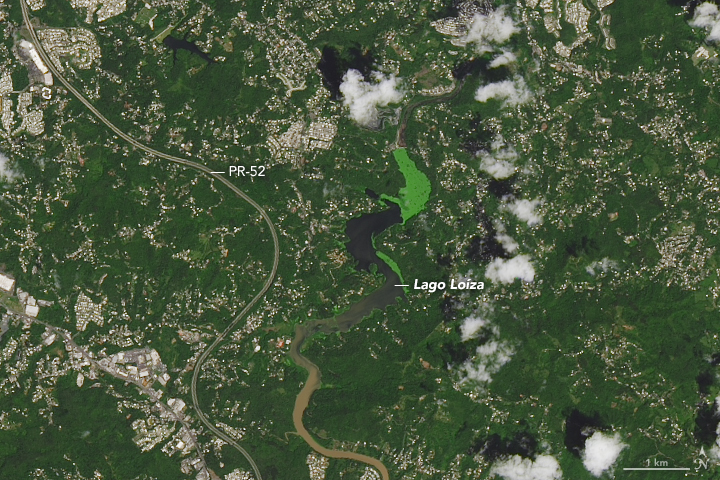 Part of Puerto Rico the year before Hurricane Maria, the area around the Lago Loíza reservoir, south of San Juan and north of Caguas (Nasa Earth Observatory)