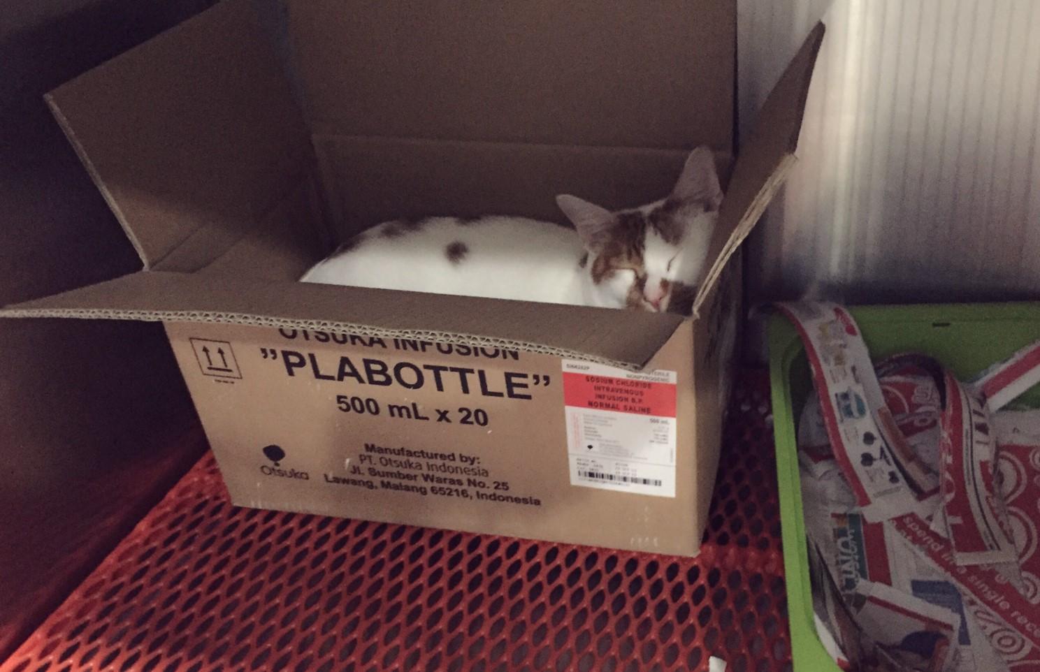 Tisoy in his cardboard box