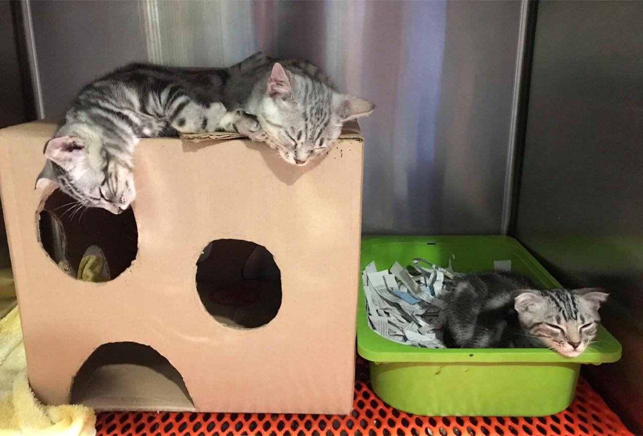 Kittens enjoying the cardboard creations