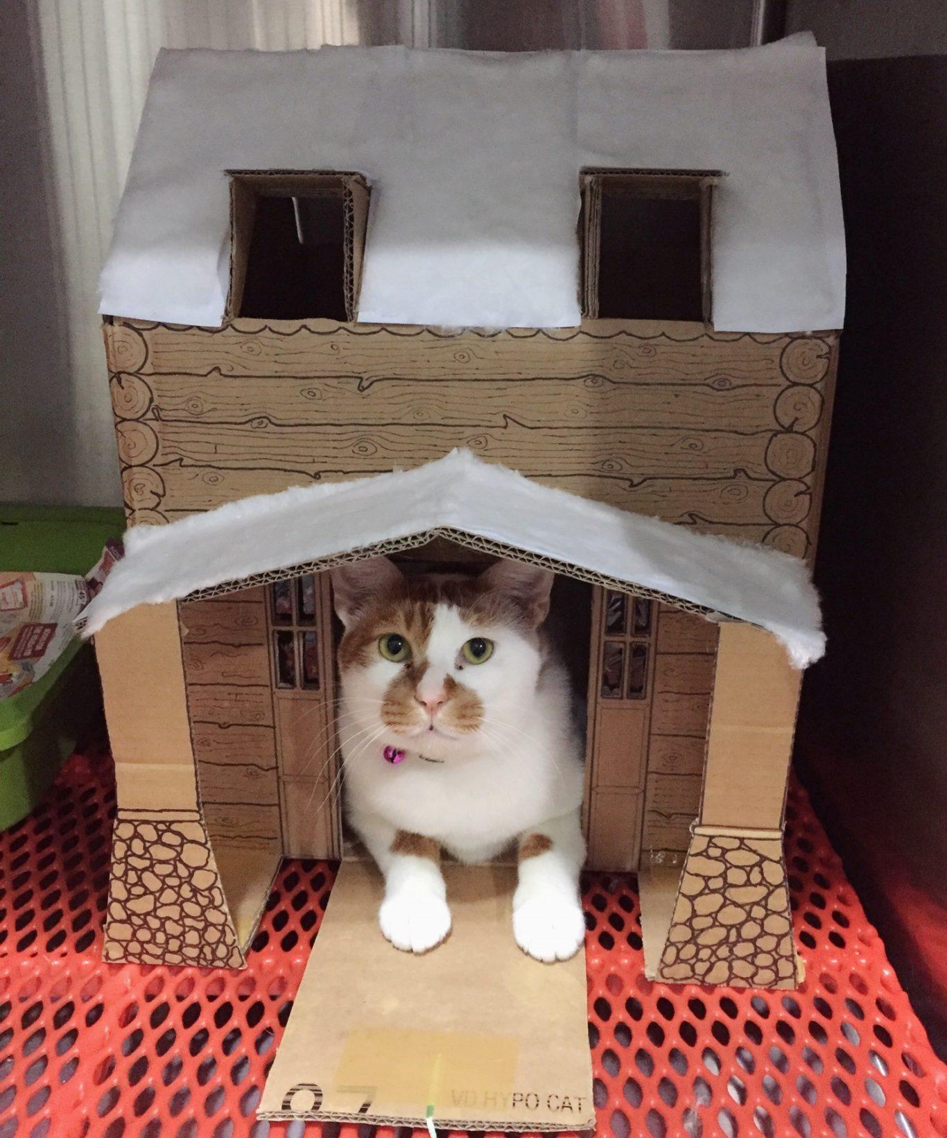 Кошкин дом своими руками из коробки фото