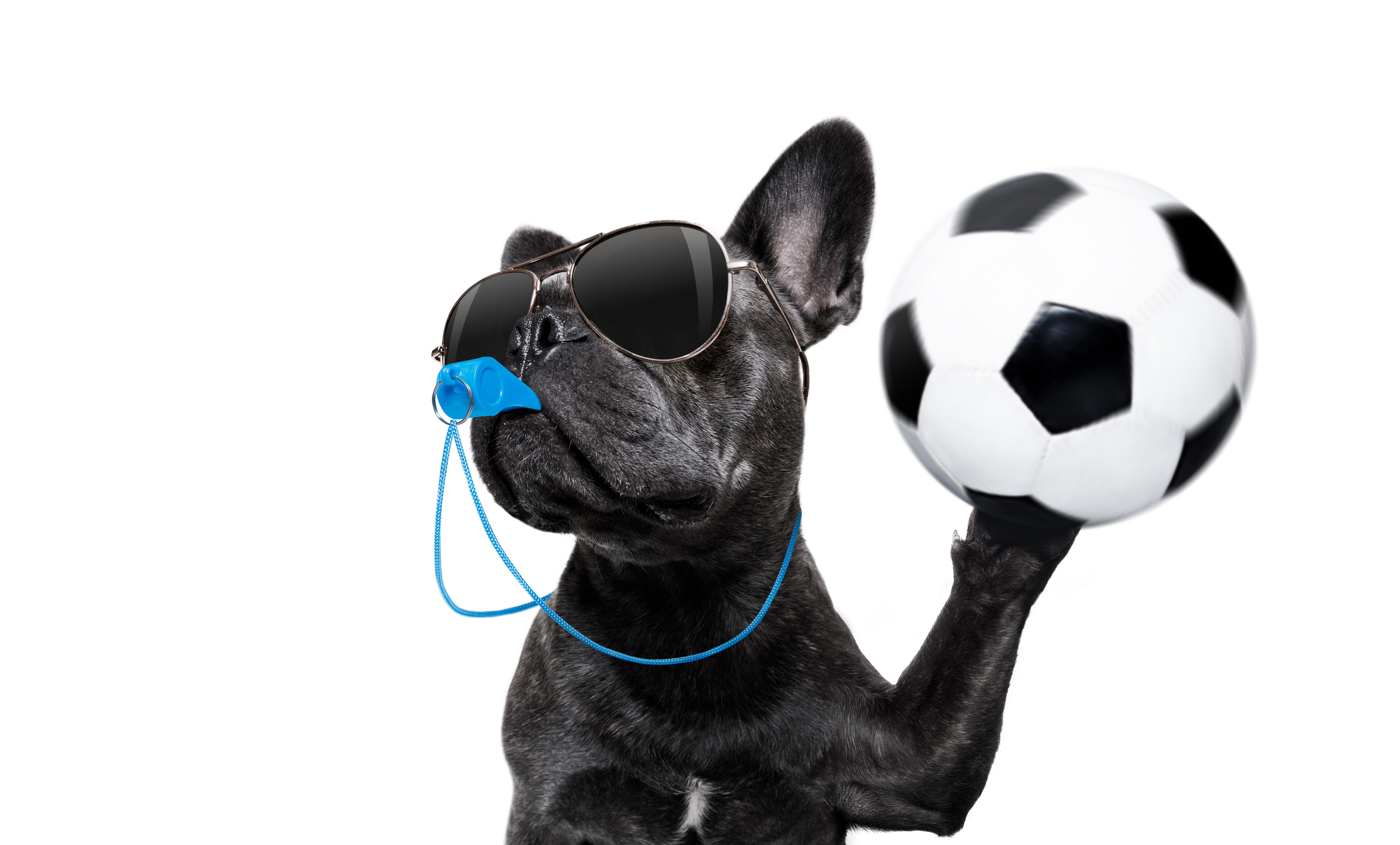 Fun photo of a dog as a football referee (Thinkstock/PA)