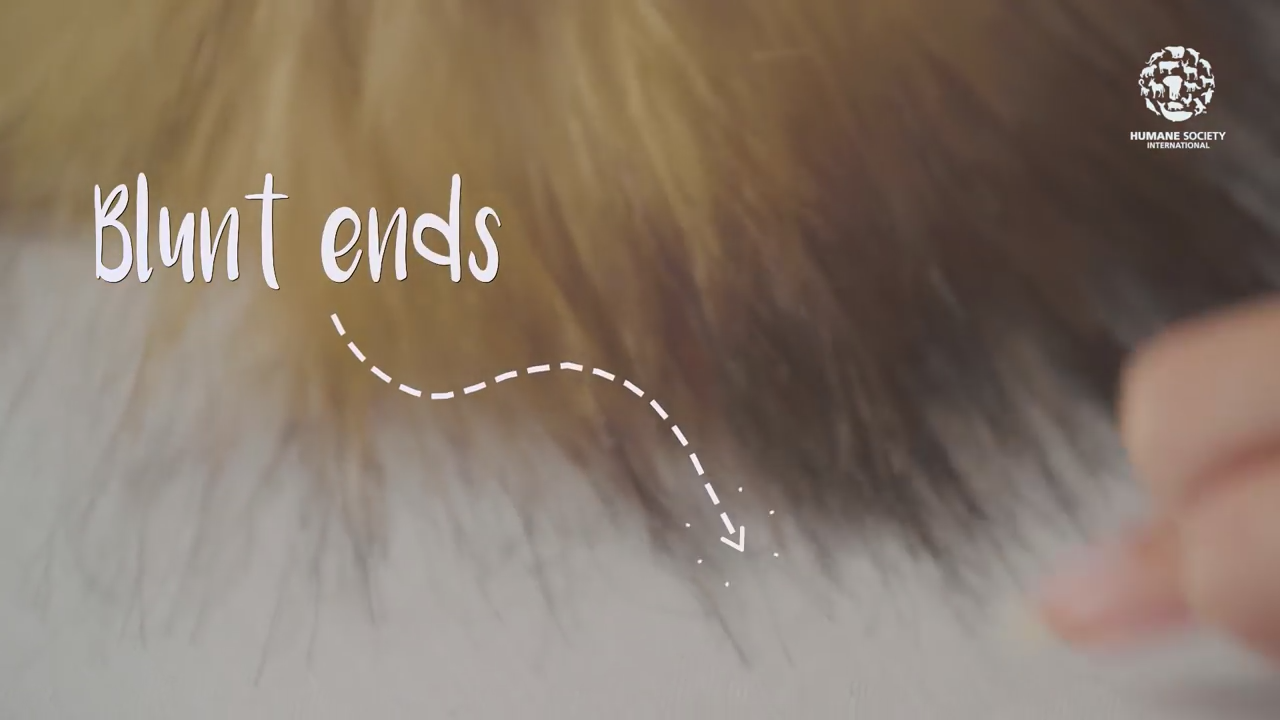screenshot from a video showing the blunt ends of a piece of faux fur trim