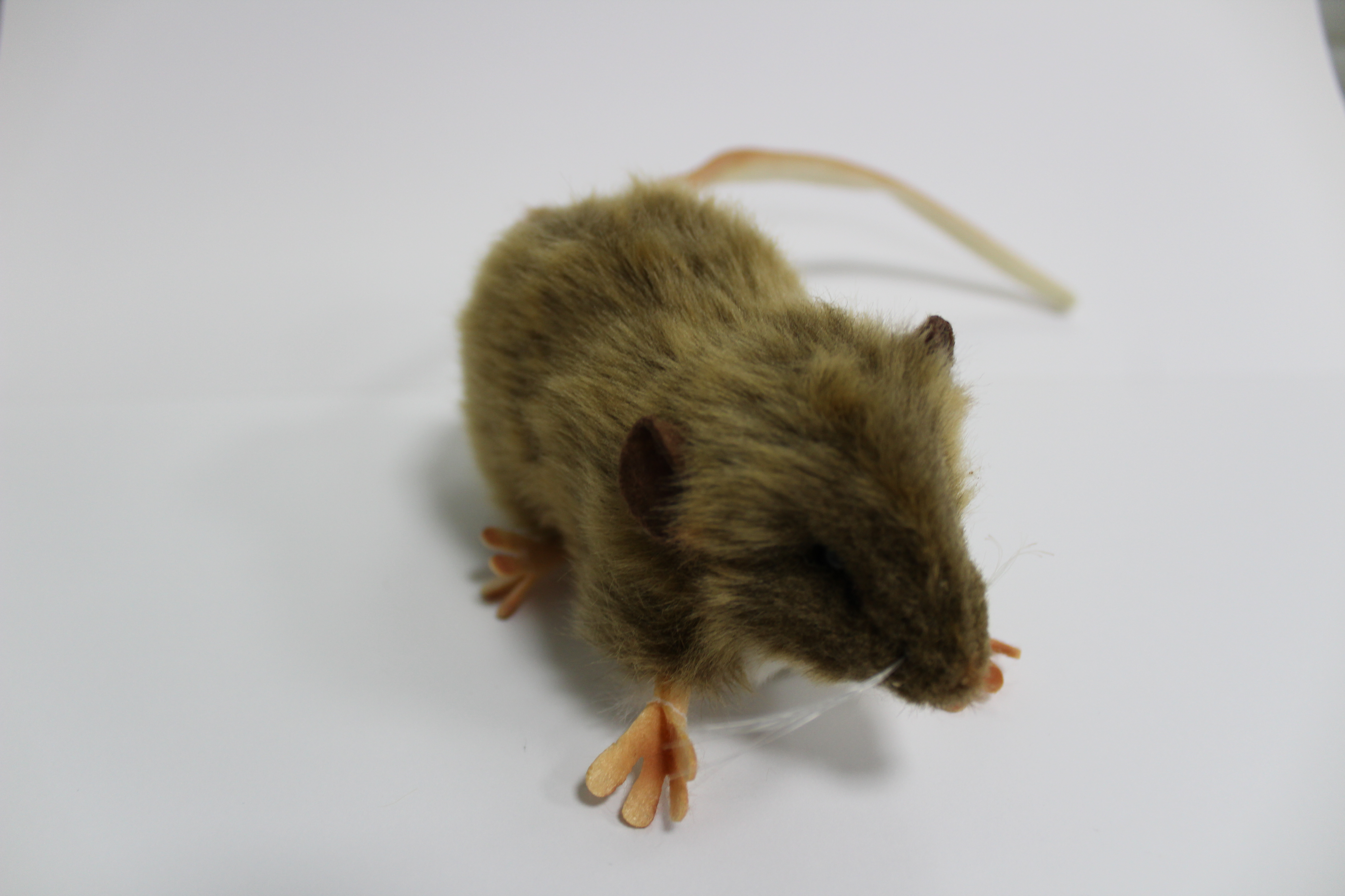 The toy rat on sale at The National Archives