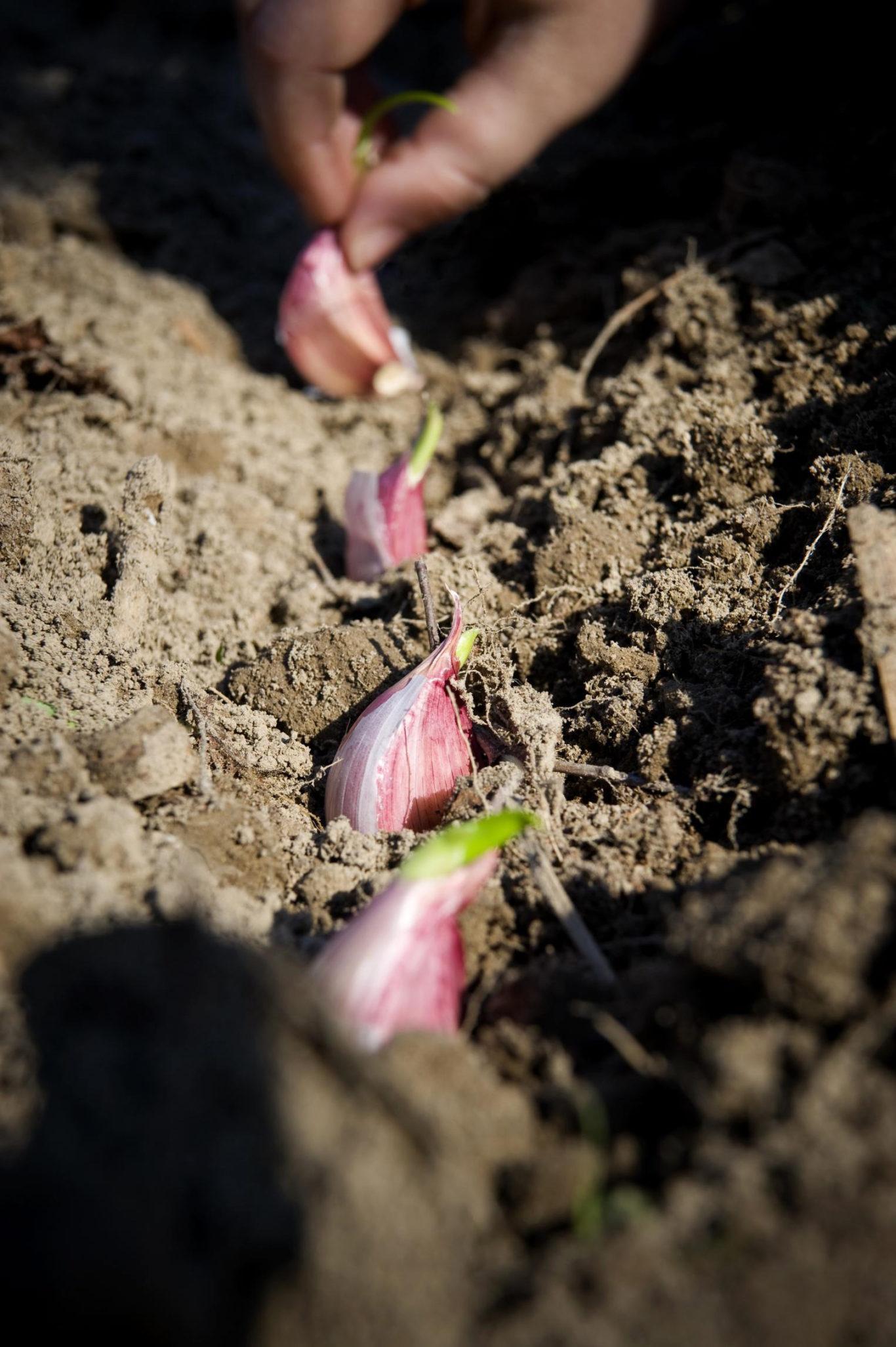 Значение сна сажать цветы 16