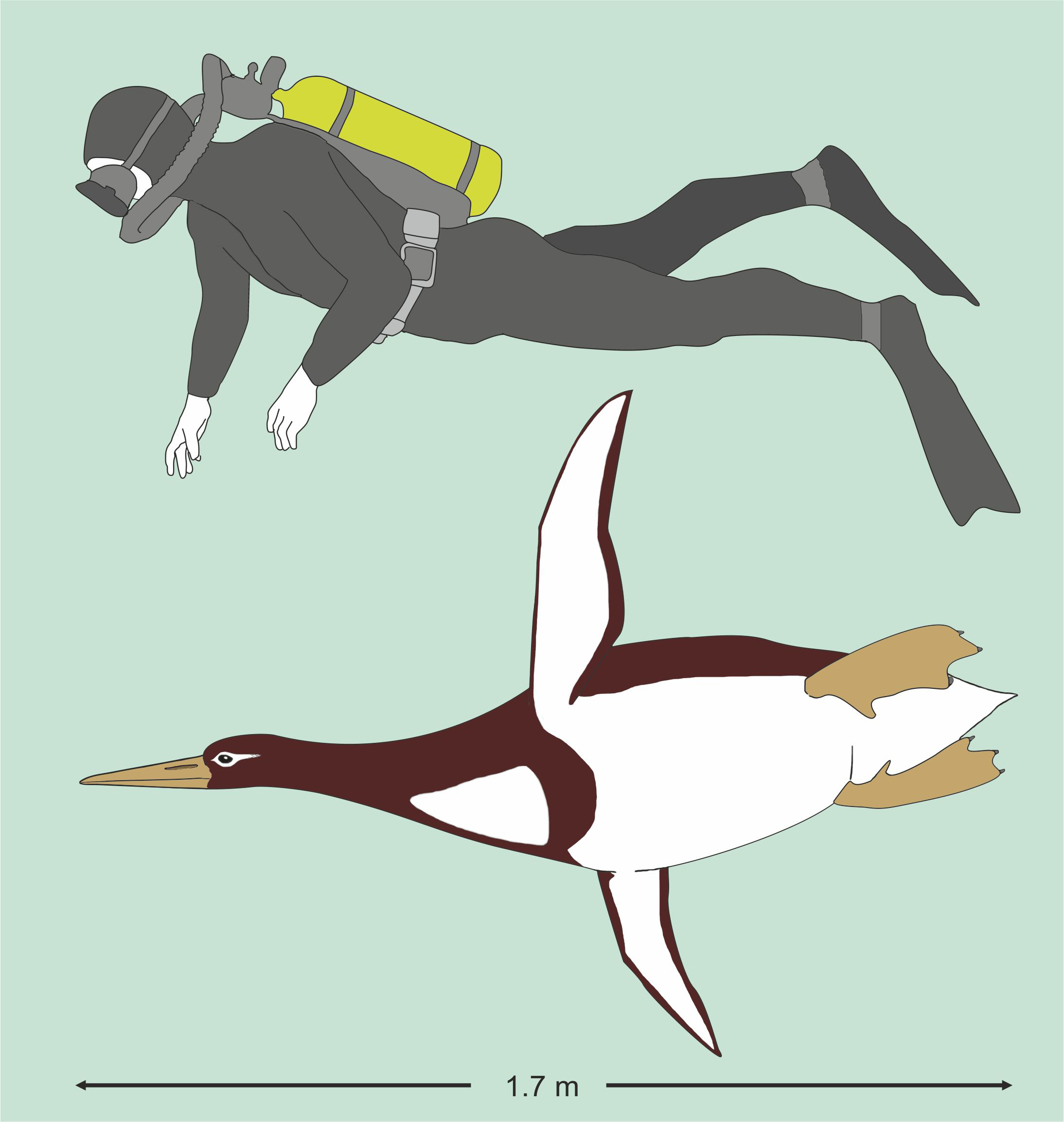 The newly identified extinct giant penguin measures 1.77m long (Senckenberg Research Institute/PA)