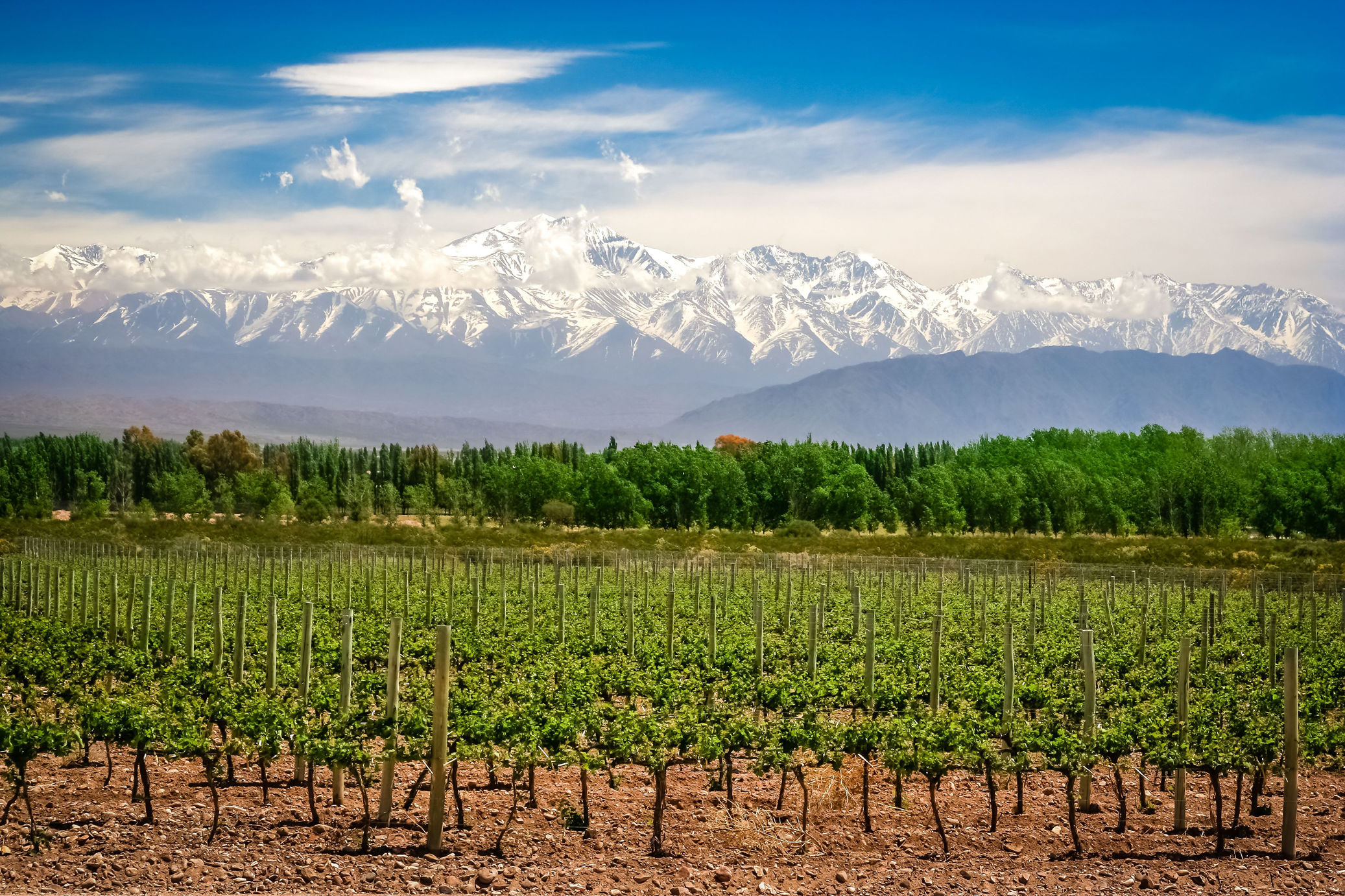 Vineyards in Argentina with Andes in the background (Thinkstock/PA)