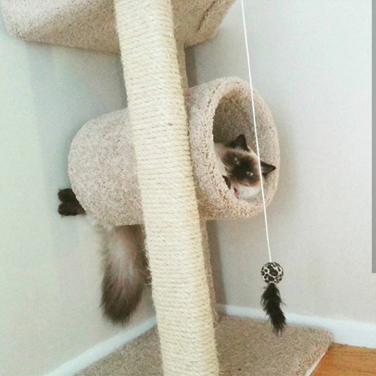 The cat sits on a scratching post