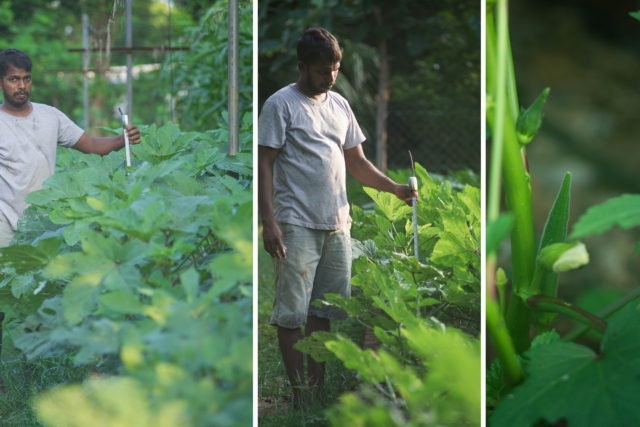 A farm trial in India compared precision and manual irrigation for crops such as okra (SCORRES/PA)