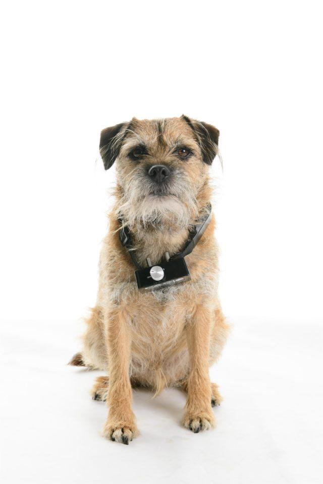 Electric Shock Dog Collars Cruel