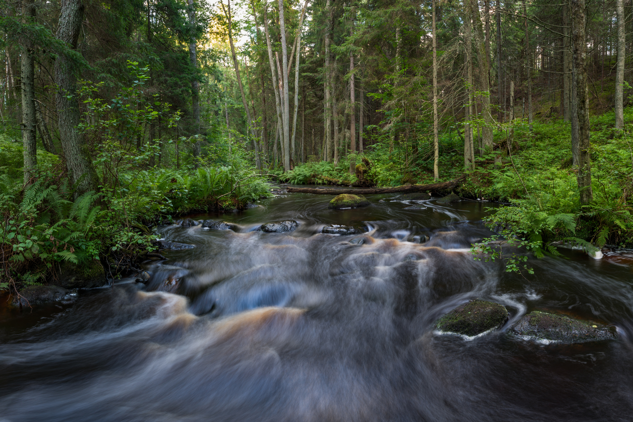 Beautiful river in the forest - Lahemaa National Park, Estonia