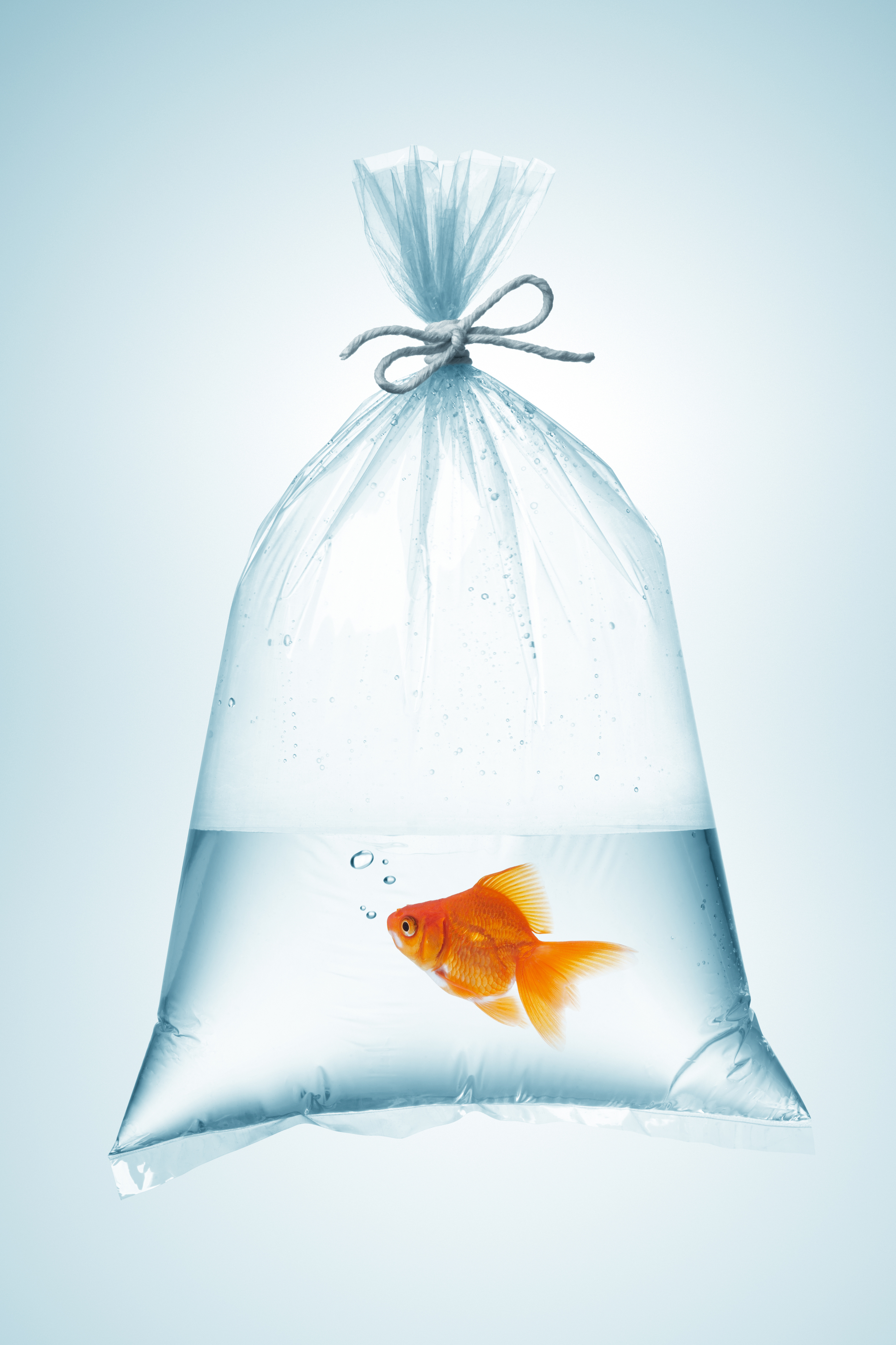 Fish are often transferred to ponds from bags. (Thinkstock/PA)