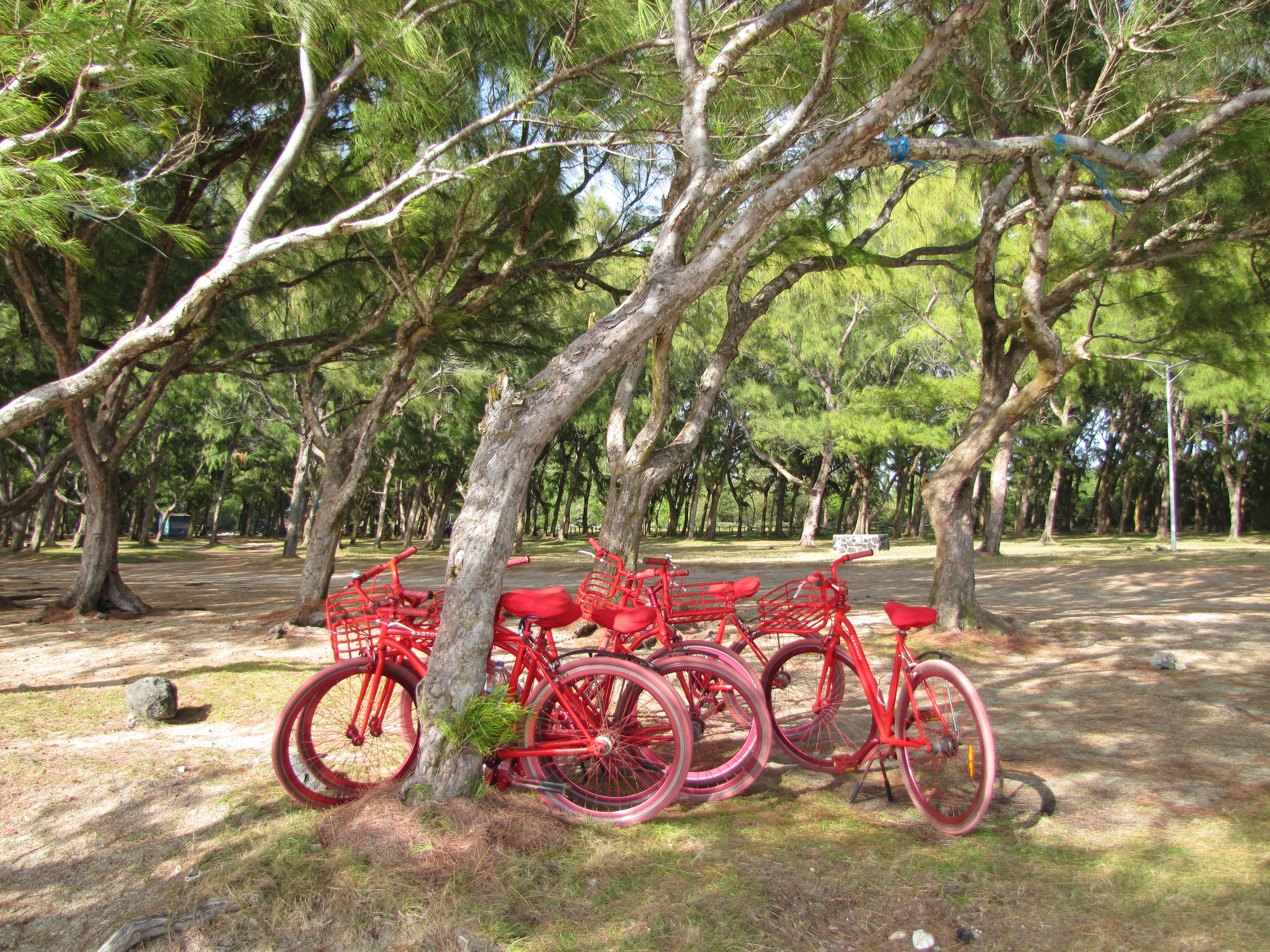 Lux Belle Mare hotel bikes rest against a tree on Mauritius (Verena Vogt/PA)