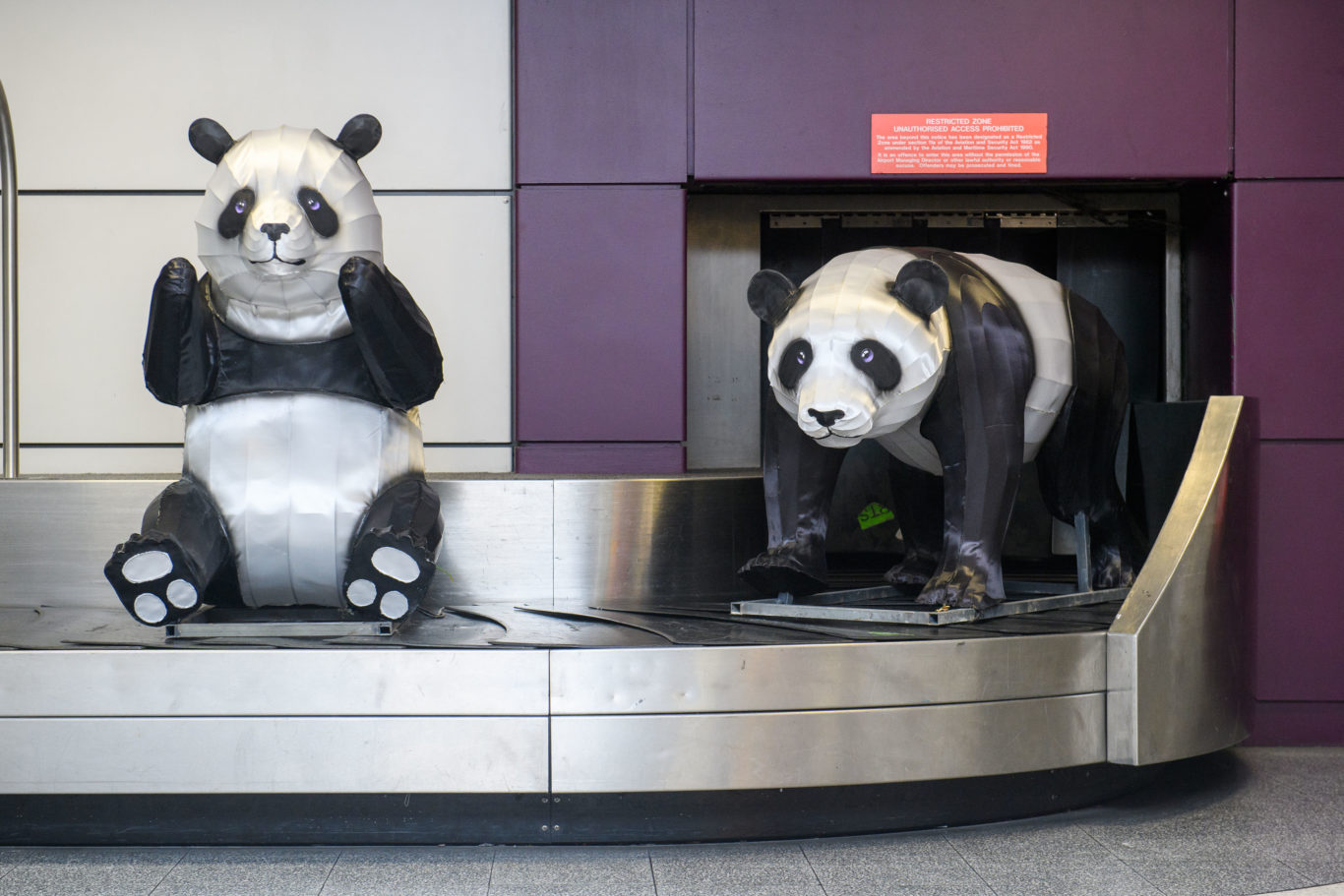 Edinburgh is home to two giant pandas from China