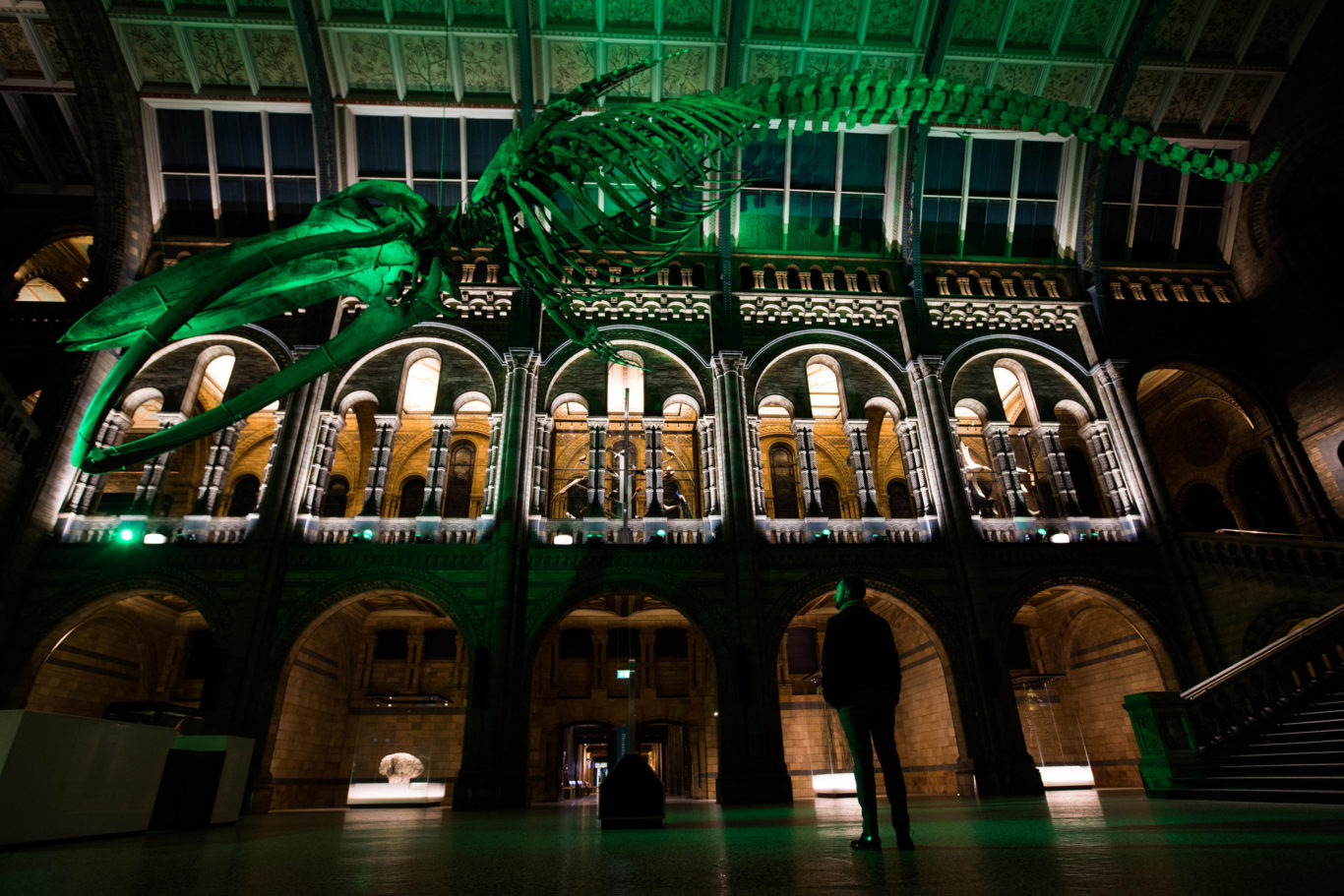 Hope the whale at the Natural History Museum in London was also illuminated (David Parry/PA)