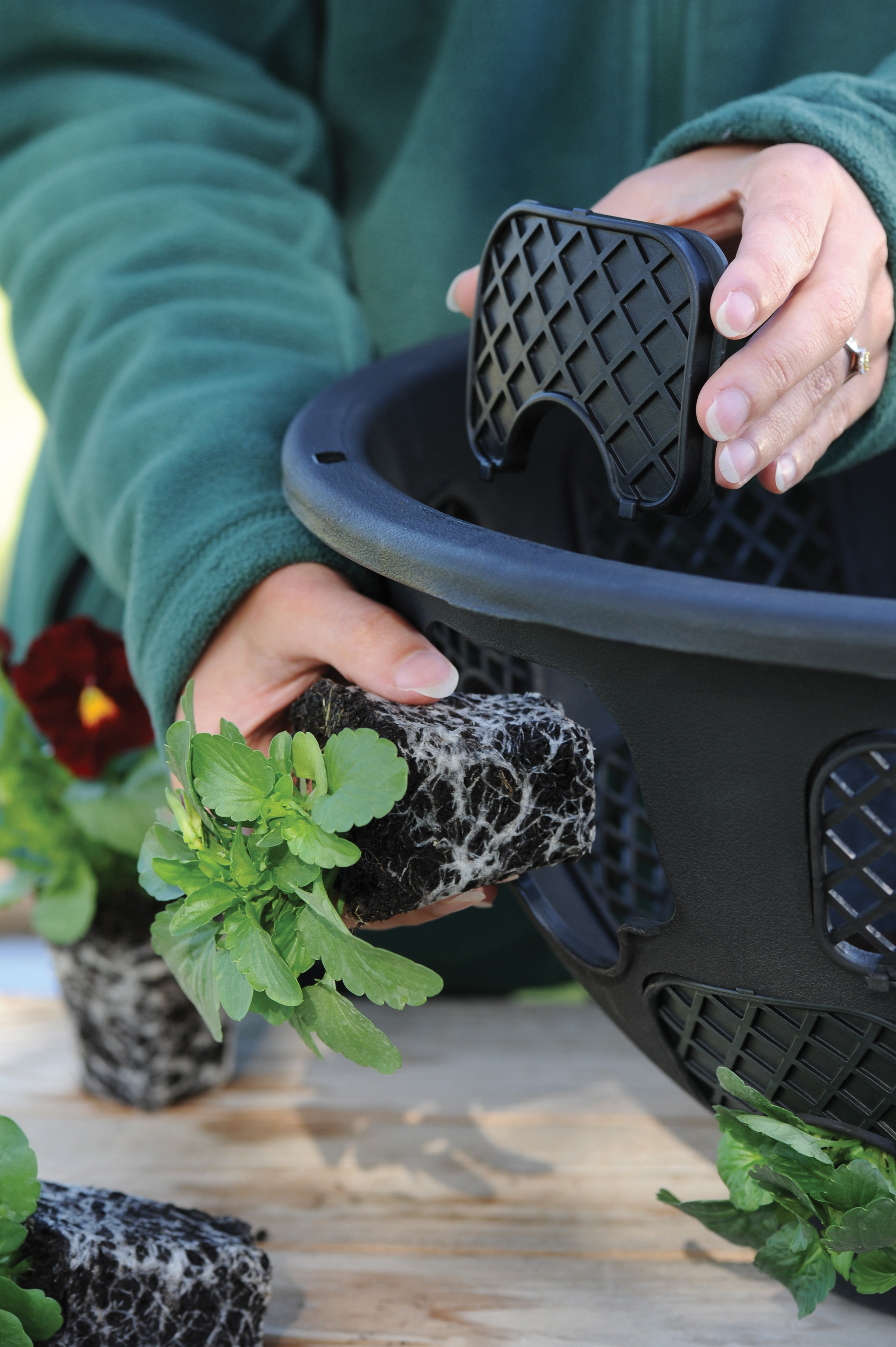 Plug plants being planted into hanging baskets (Thompson & Morgan/PA)