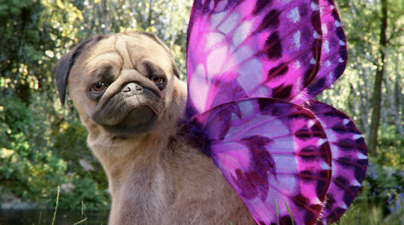 The Puggerfly with wings