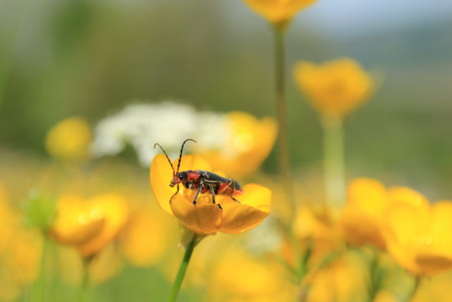 Local Wildlife Sites are important homes for plants and animals (Kieron Huston/Wildlife Trusts/PA)