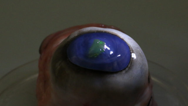 Scientists create contact lenses that could shoot lasers like Superman