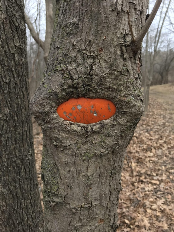 A tree sucking something orange