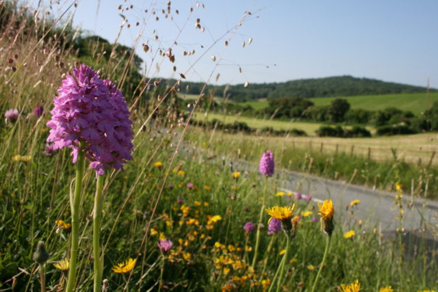 Hundreds of wildflower species including 29 native British orchids (Dominic Murphy/Plantlife/PA)