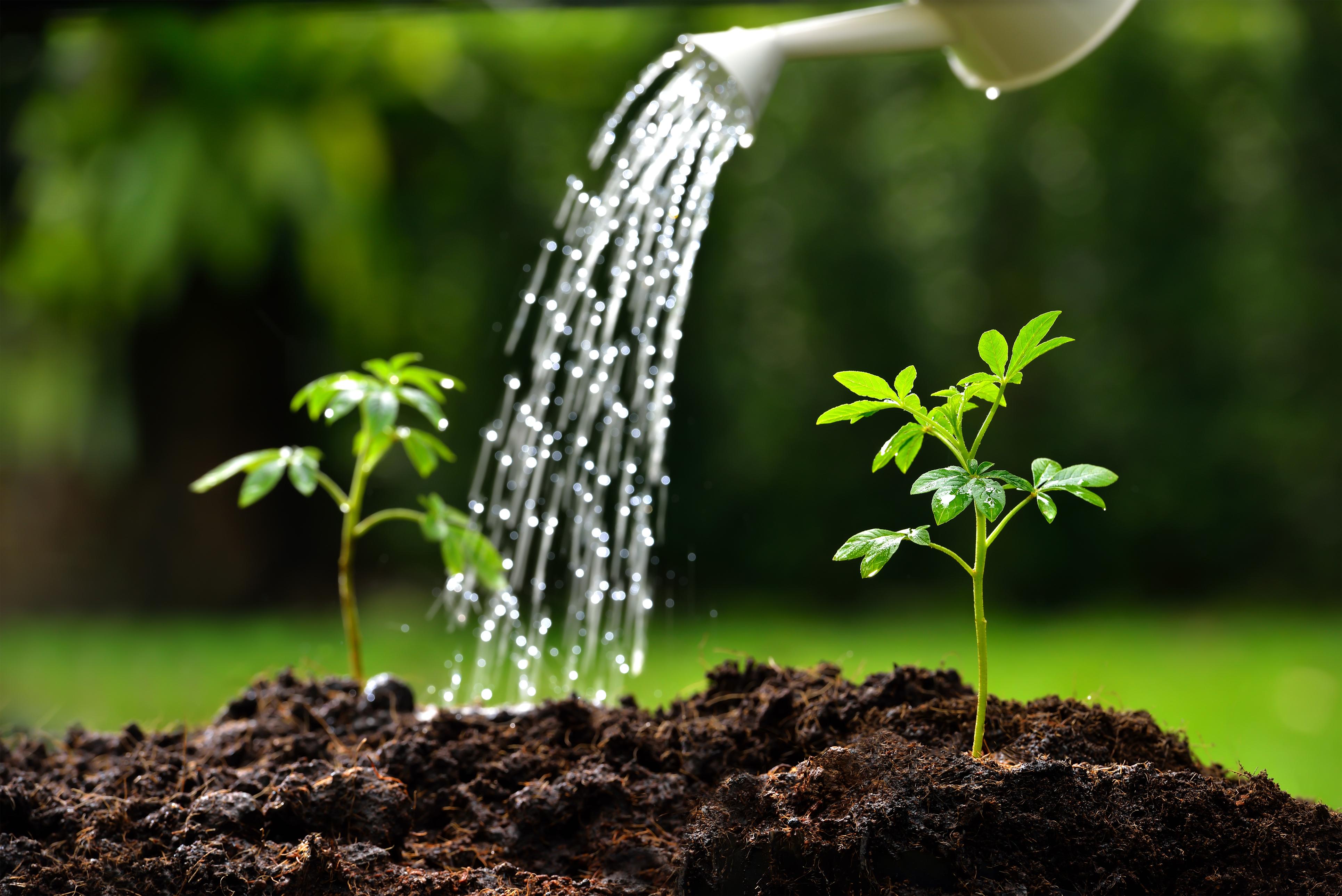 Αποτέλεσμα εικόνας για watering plants