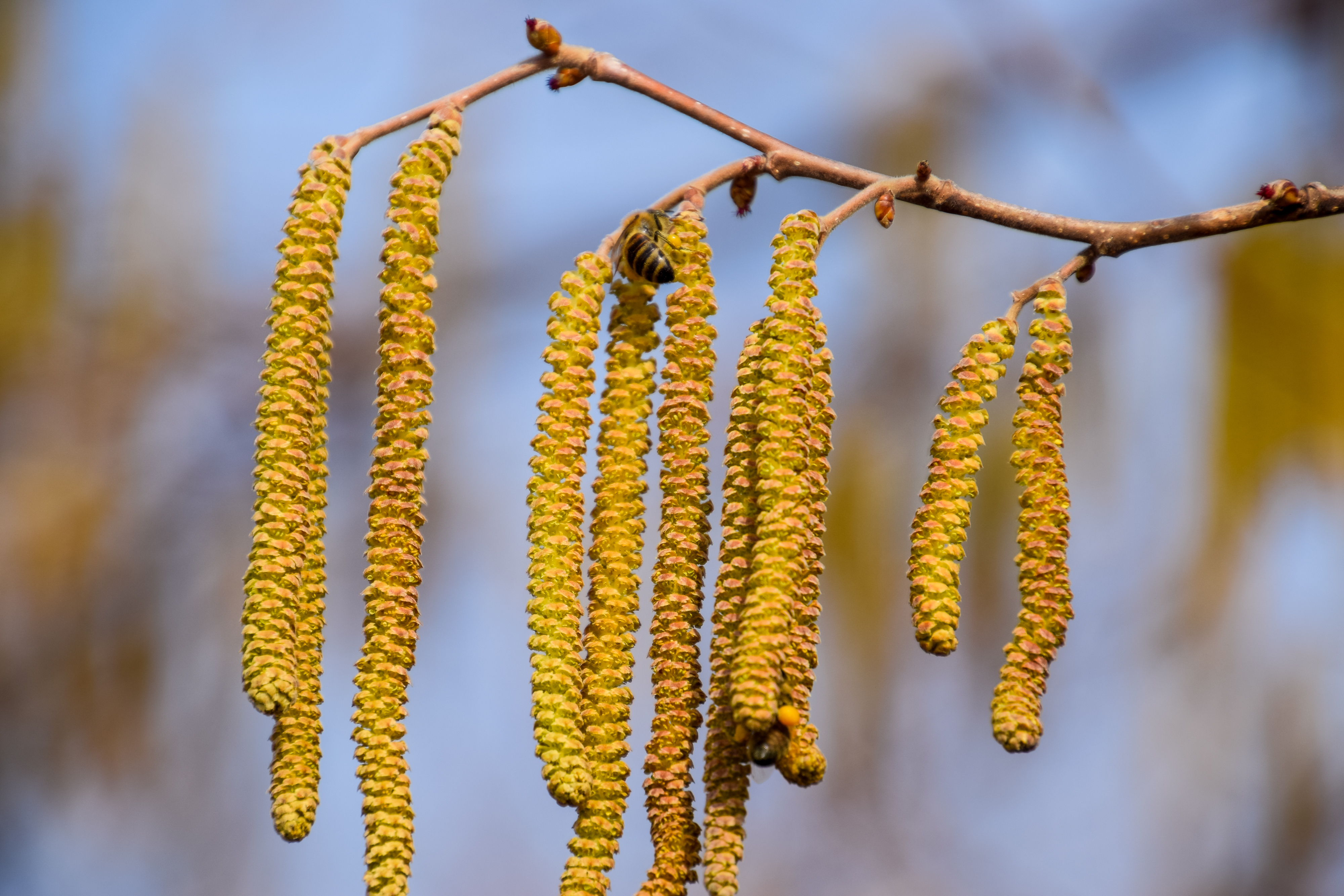 Avoid trees with catkins (Thinkstock/PA)