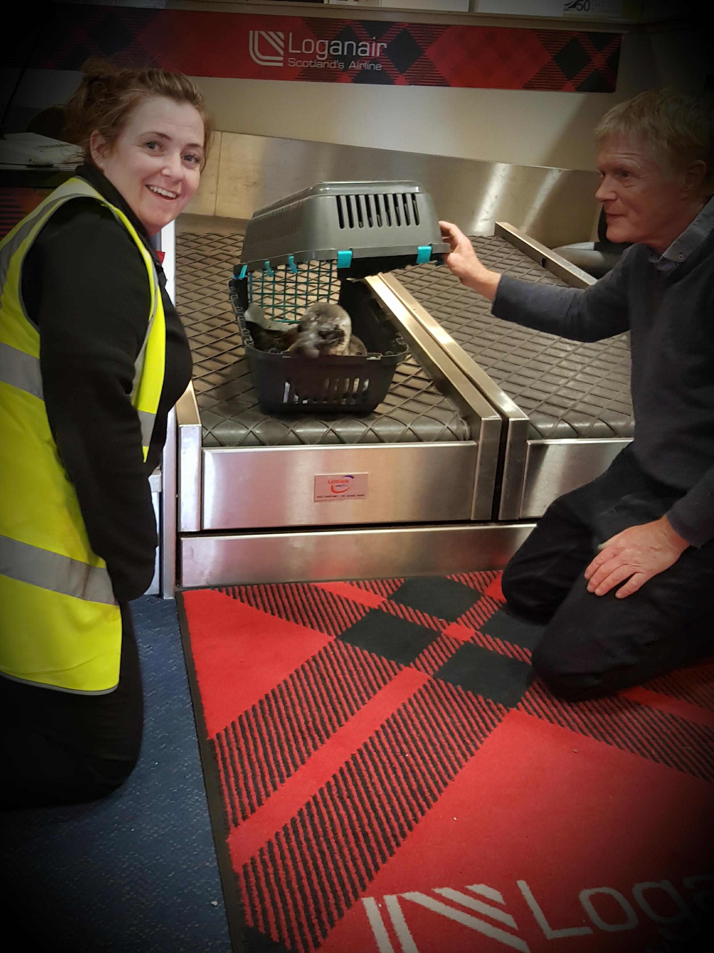Sharleen McPhee, of Loganair Customer Services, and vet David Buckland prepare the seal for its journey (Loganair/PA)