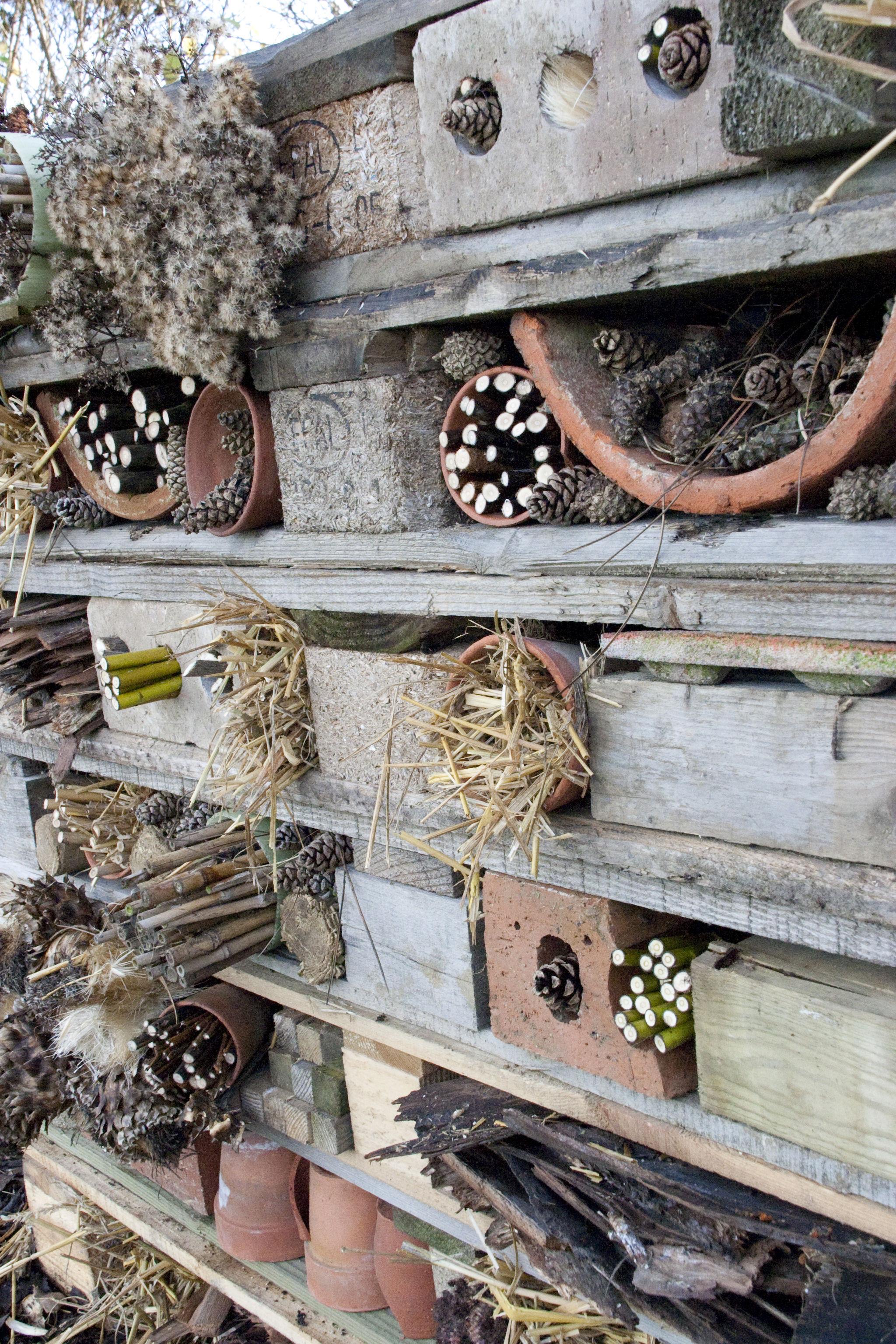 Create a bug hotel (Andrew Hellman/RHS/PA)