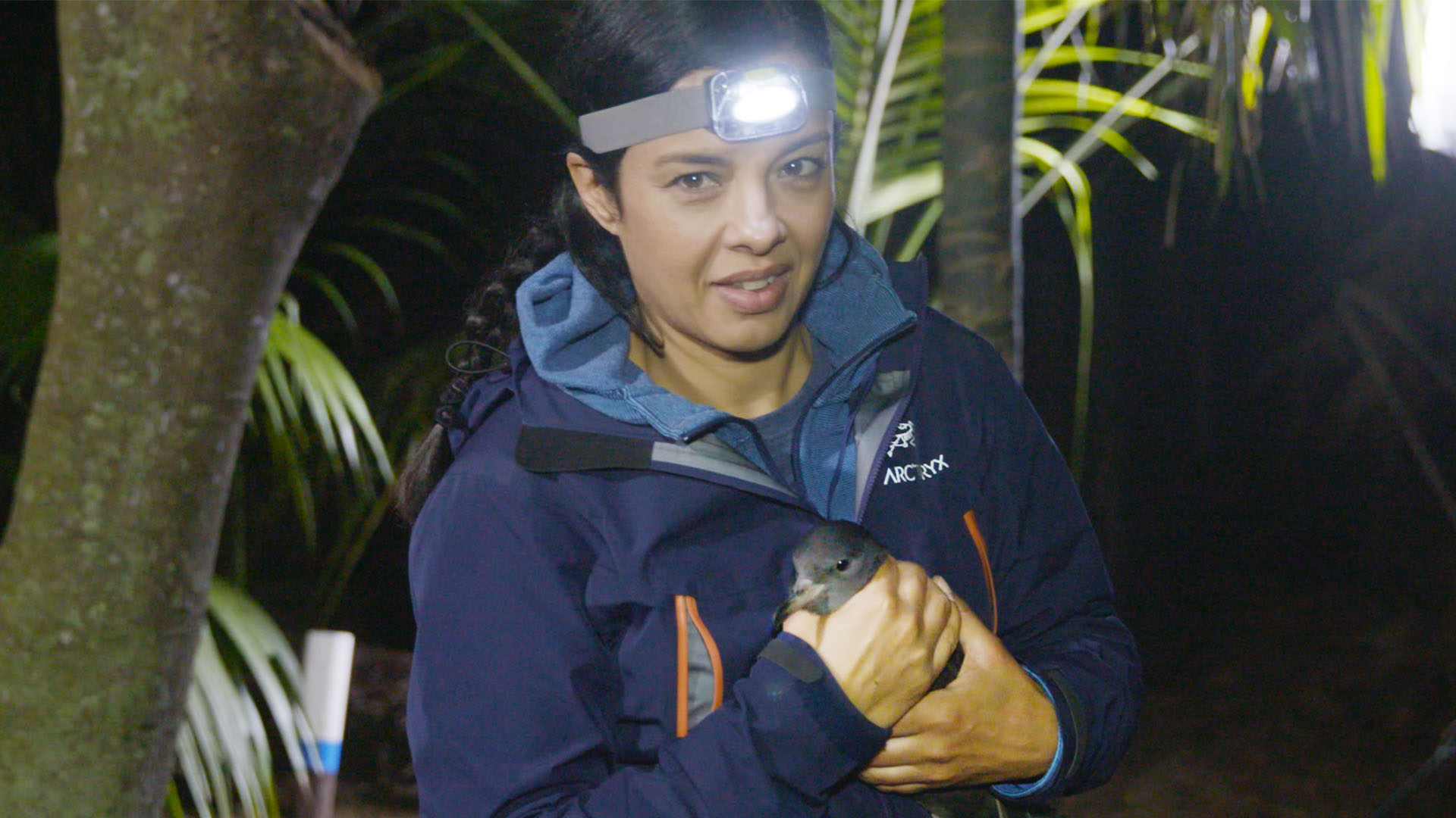 Liz Bonnin with a flesh-footed Shearwater chick (BBC)