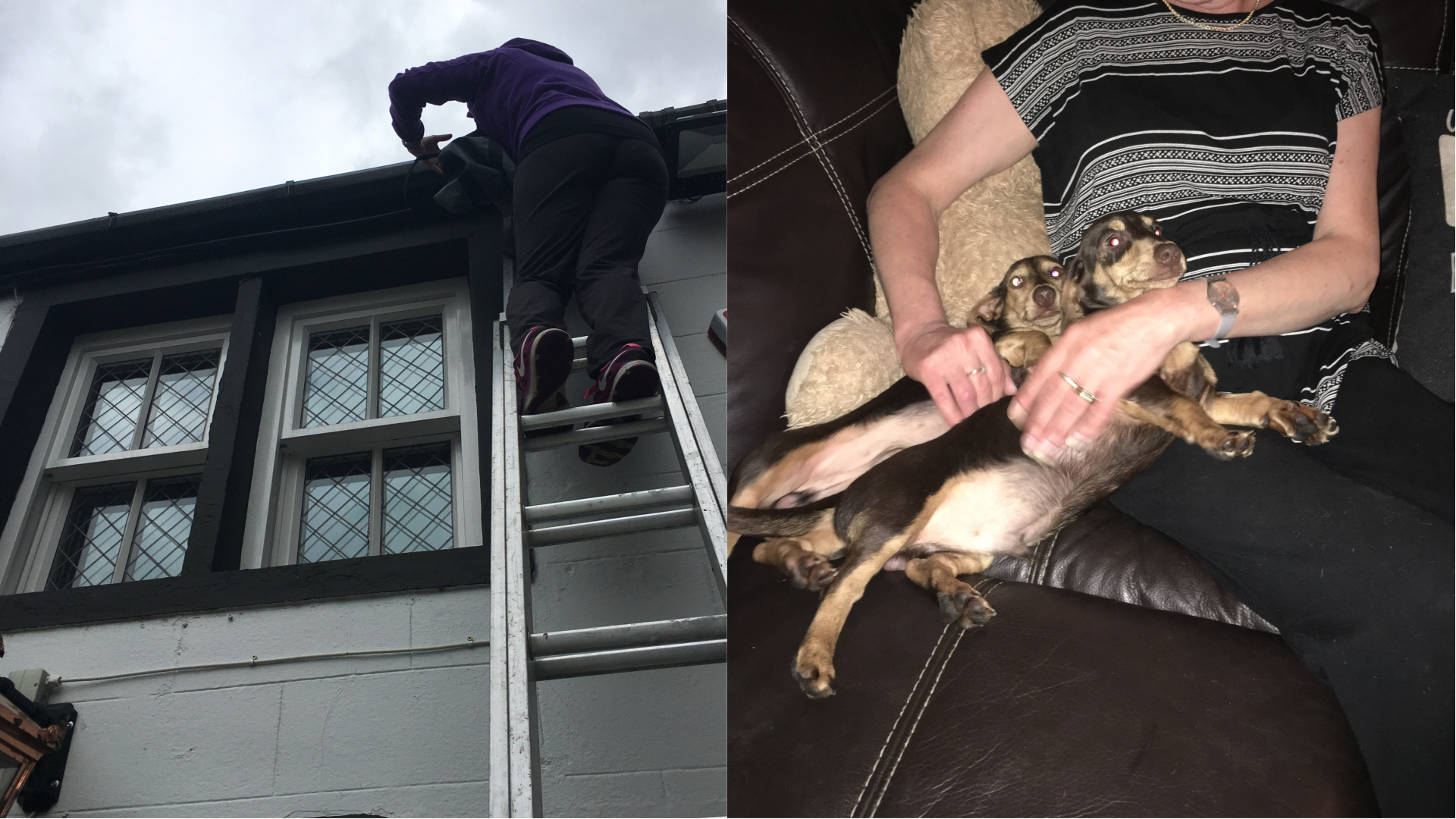 Two Dachshunds who were rescued from on top of a roof