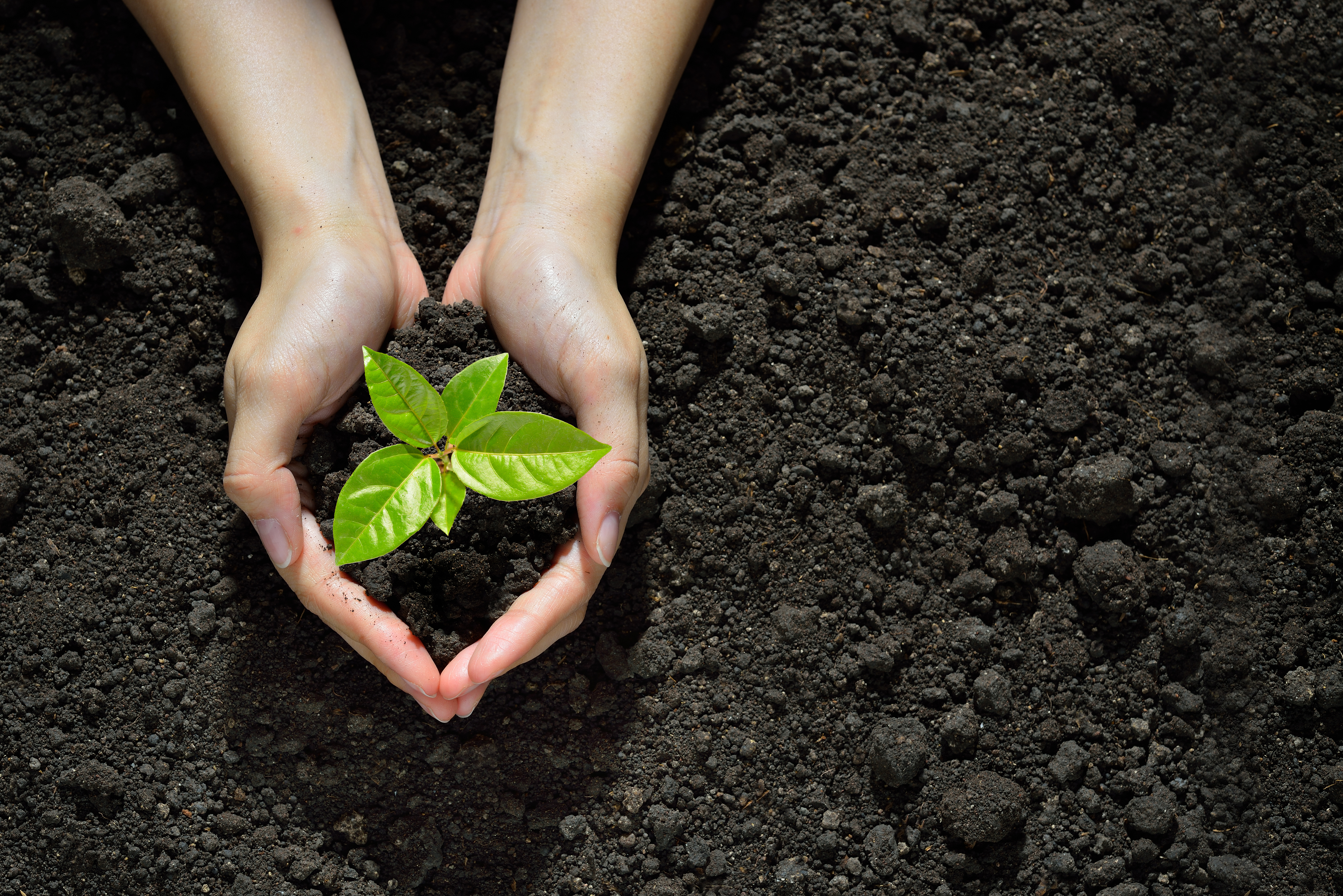 Contact with soil helps build the immune system (Thinkstock/PA)