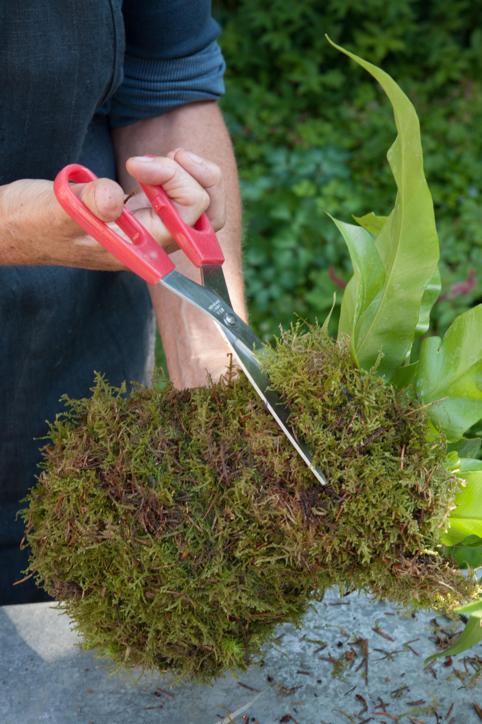 Trim the excess moss (Nicholas Hodgson/PA)