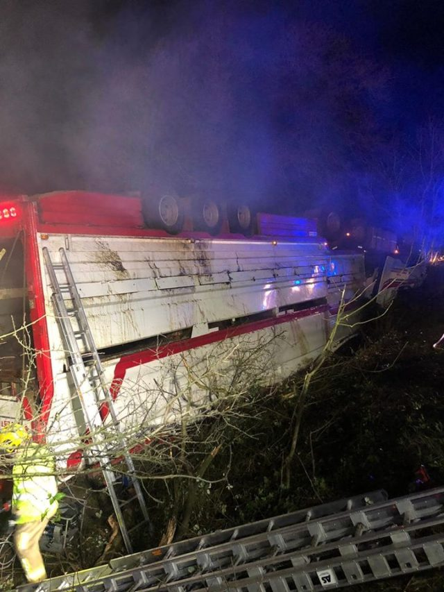 Fire fighters in Northern Ireland work to rescue 39 bulls trapped in an overturned lorry