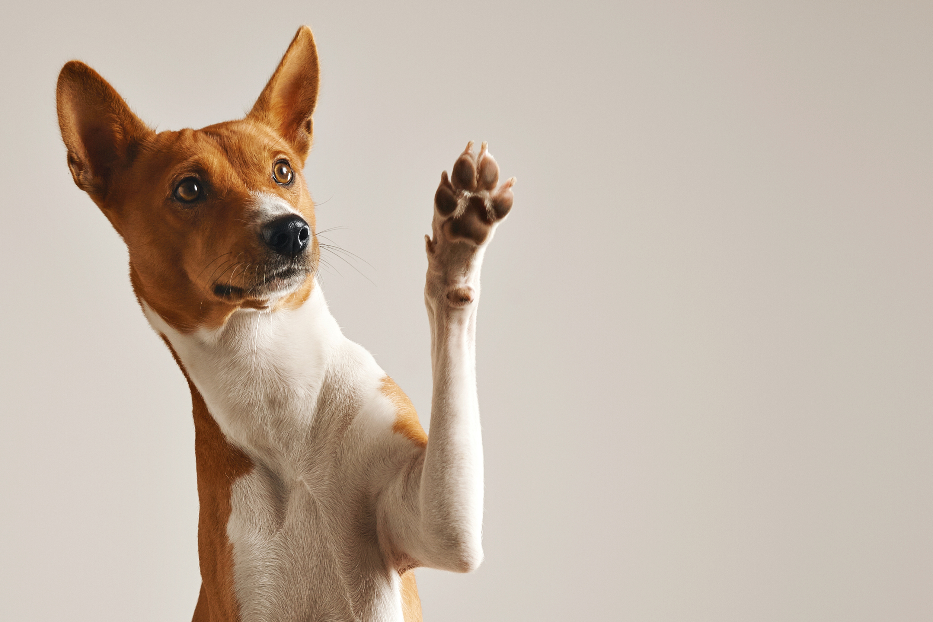 Paws for thought (Thinkstock/PA)