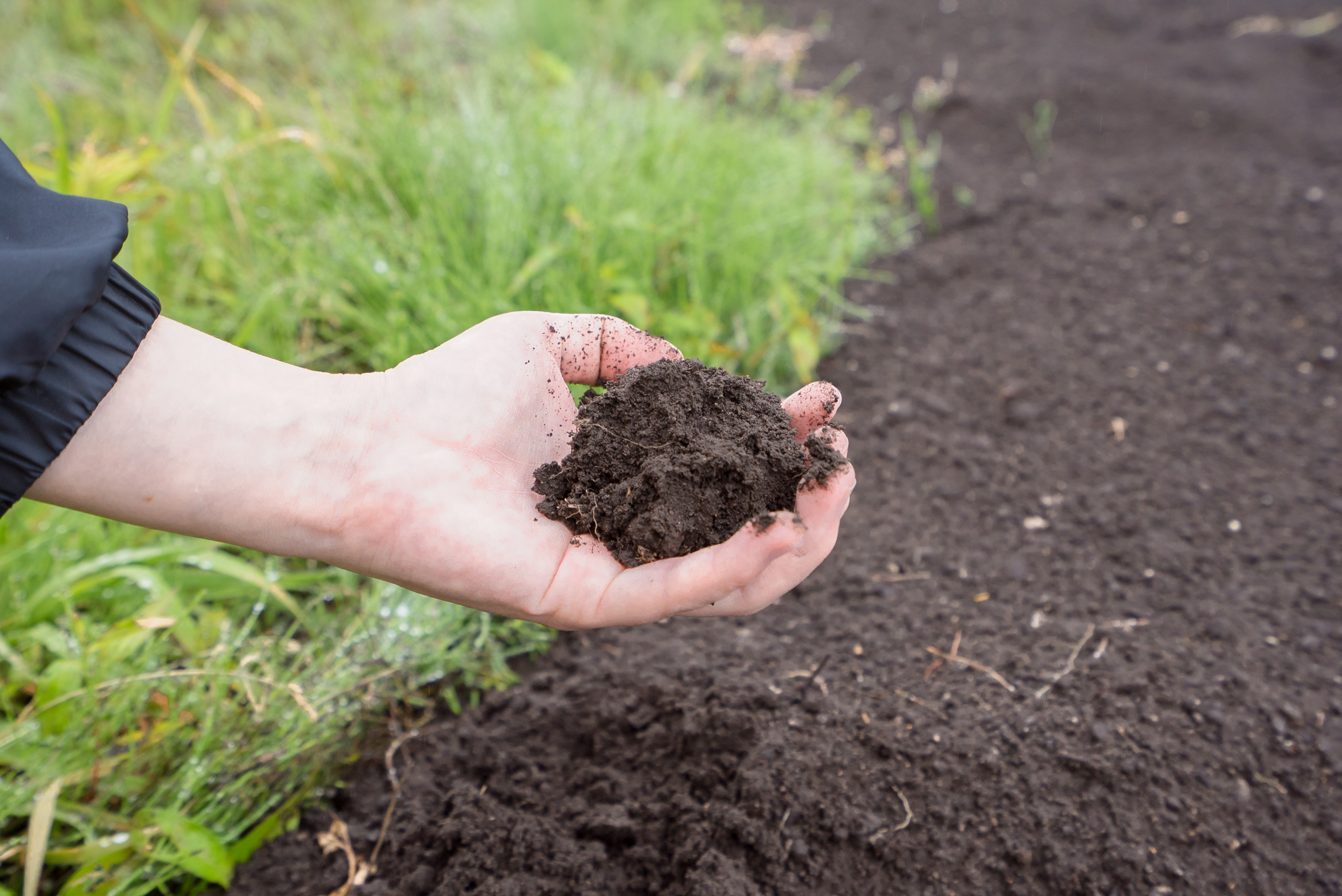 Know your soil (iStock/PA)