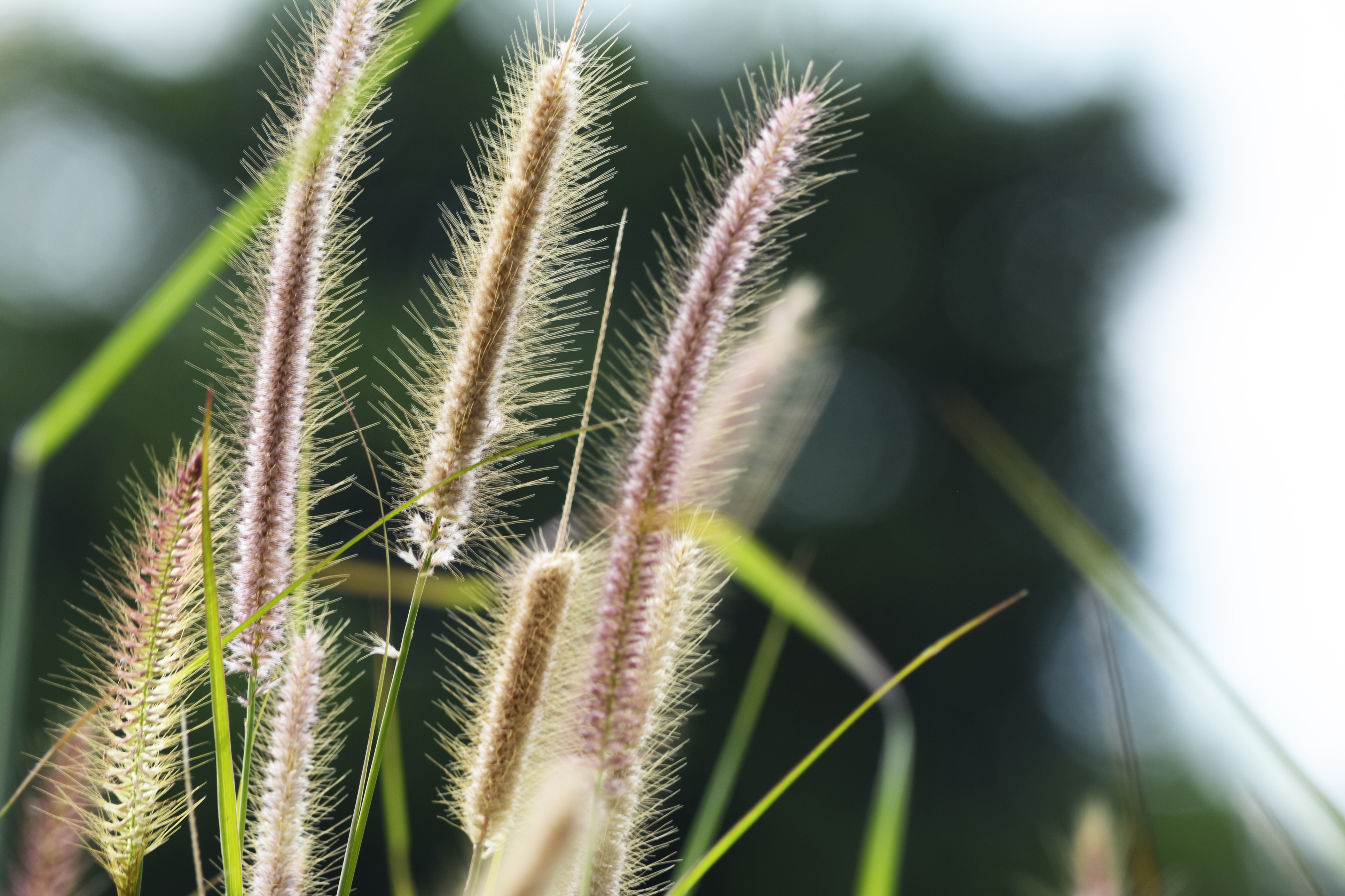 Tall grass can hide a garden eyesore (iStock/PA)