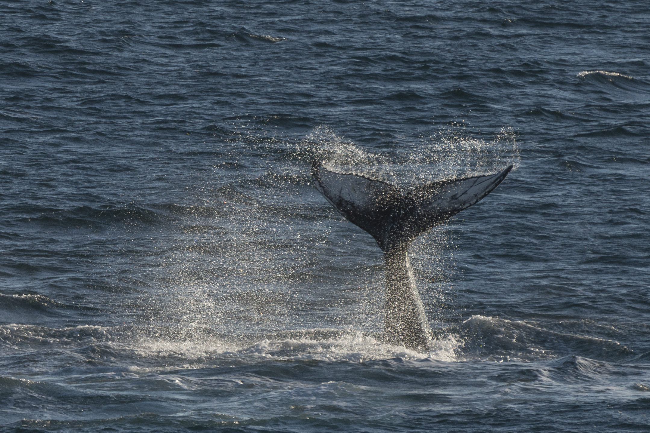 A photograph of the humpback whale in the Arctic was found by volunteer citizen scientists (Iain Rudkin Photography/PA)